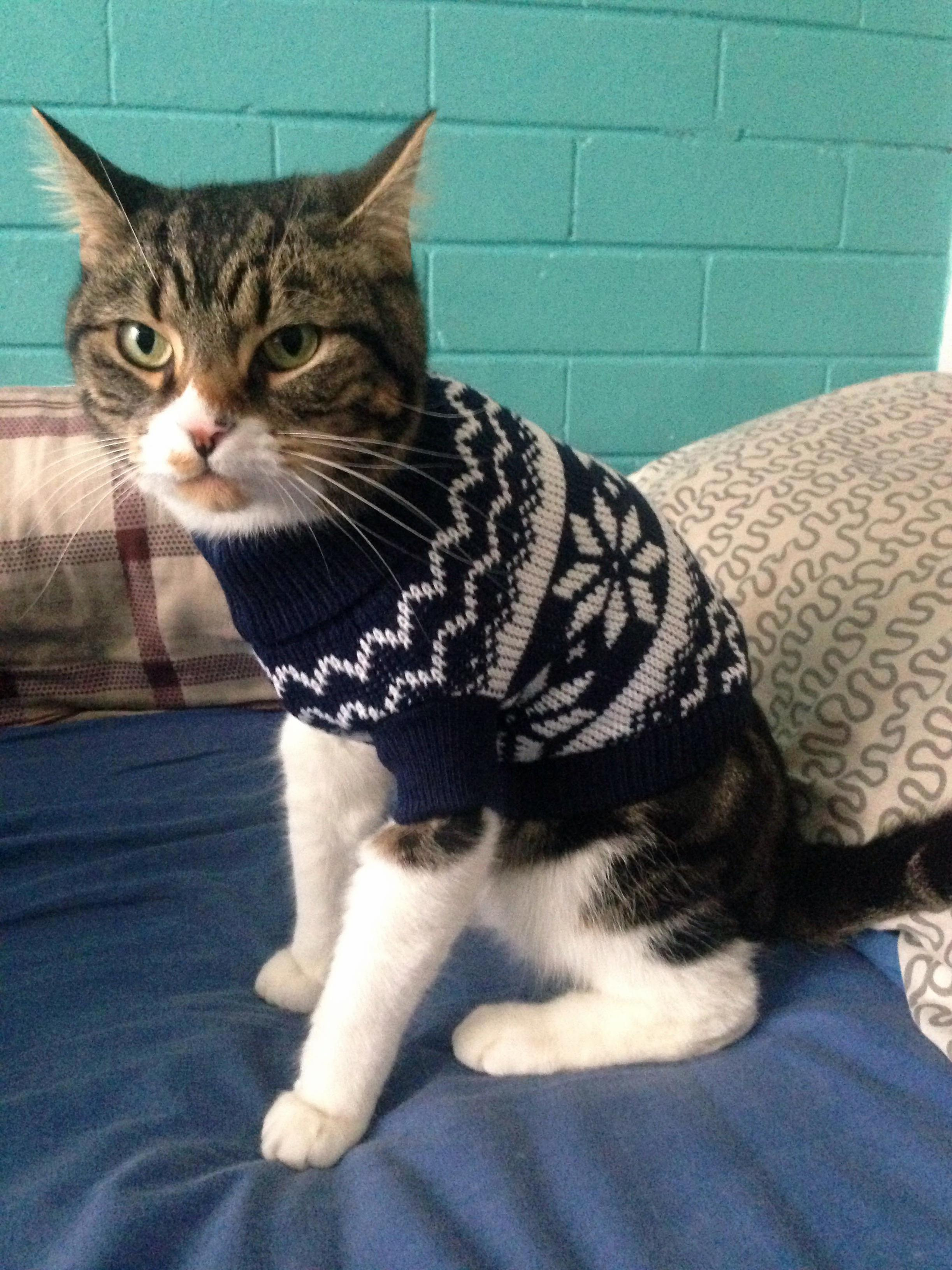 Model for a well fitted sweater