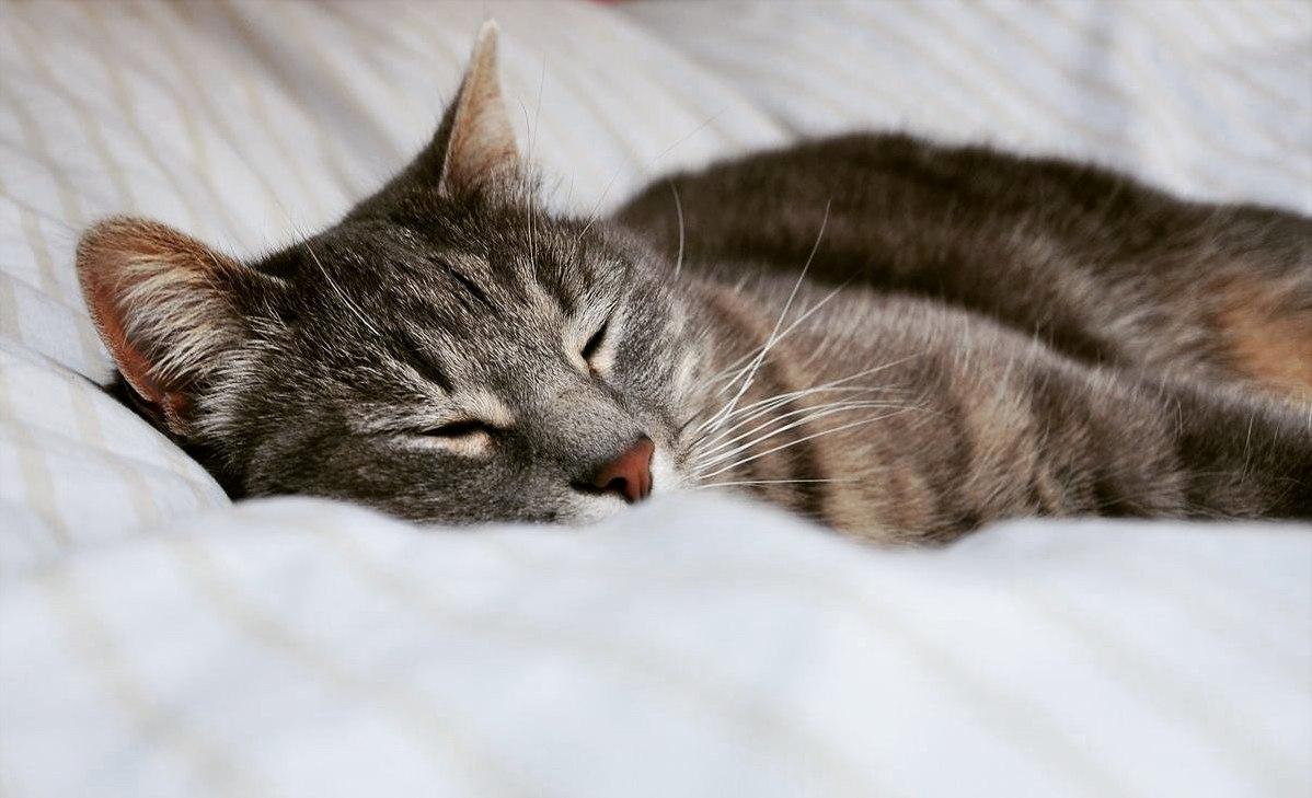 My beautiful kitty sleepy 247