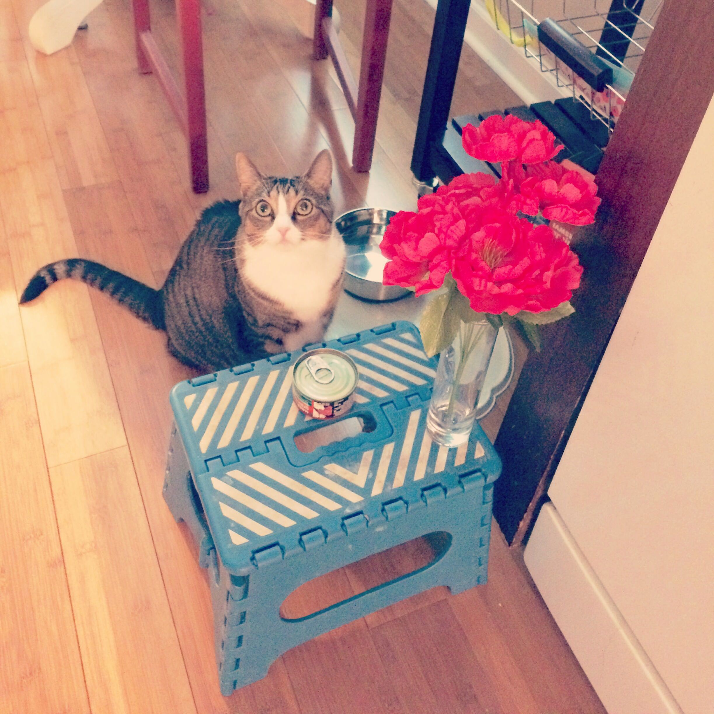 My daughter set a table for cherrycat