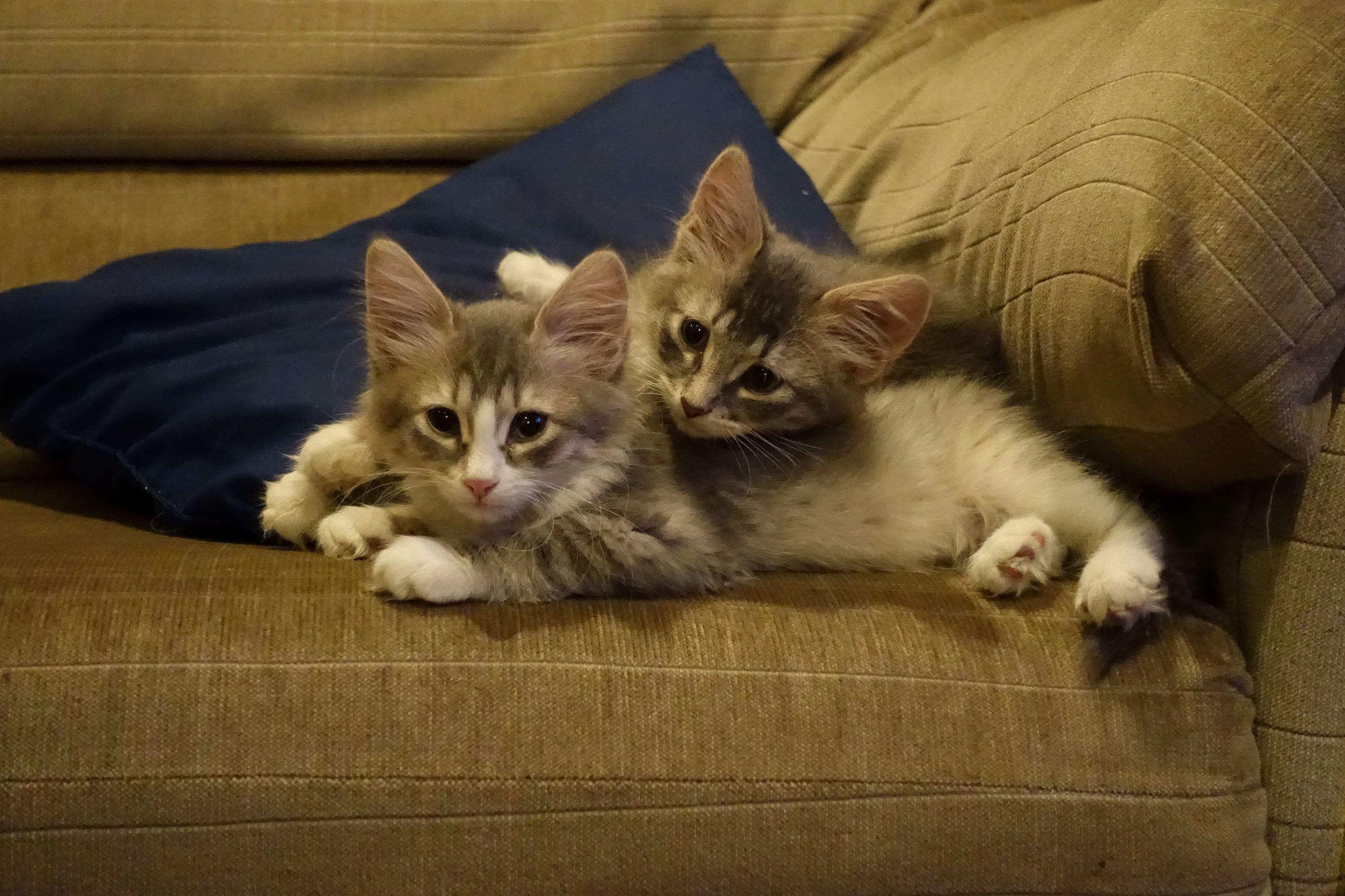 My foster twins fuzz and fizzy