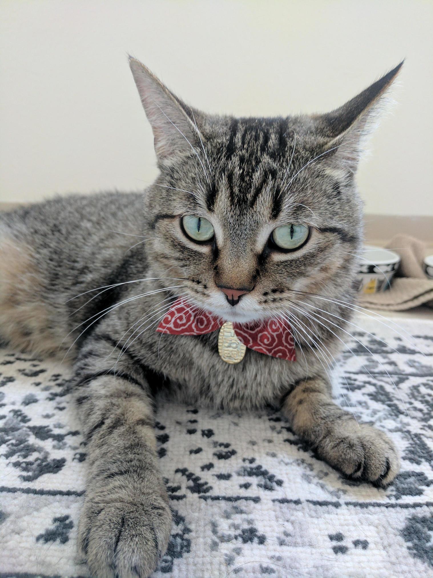 My lovely girl got a new collar