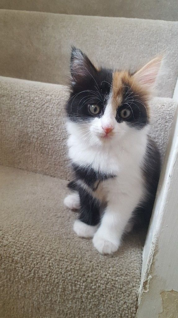 Name suggestions new calico kitty