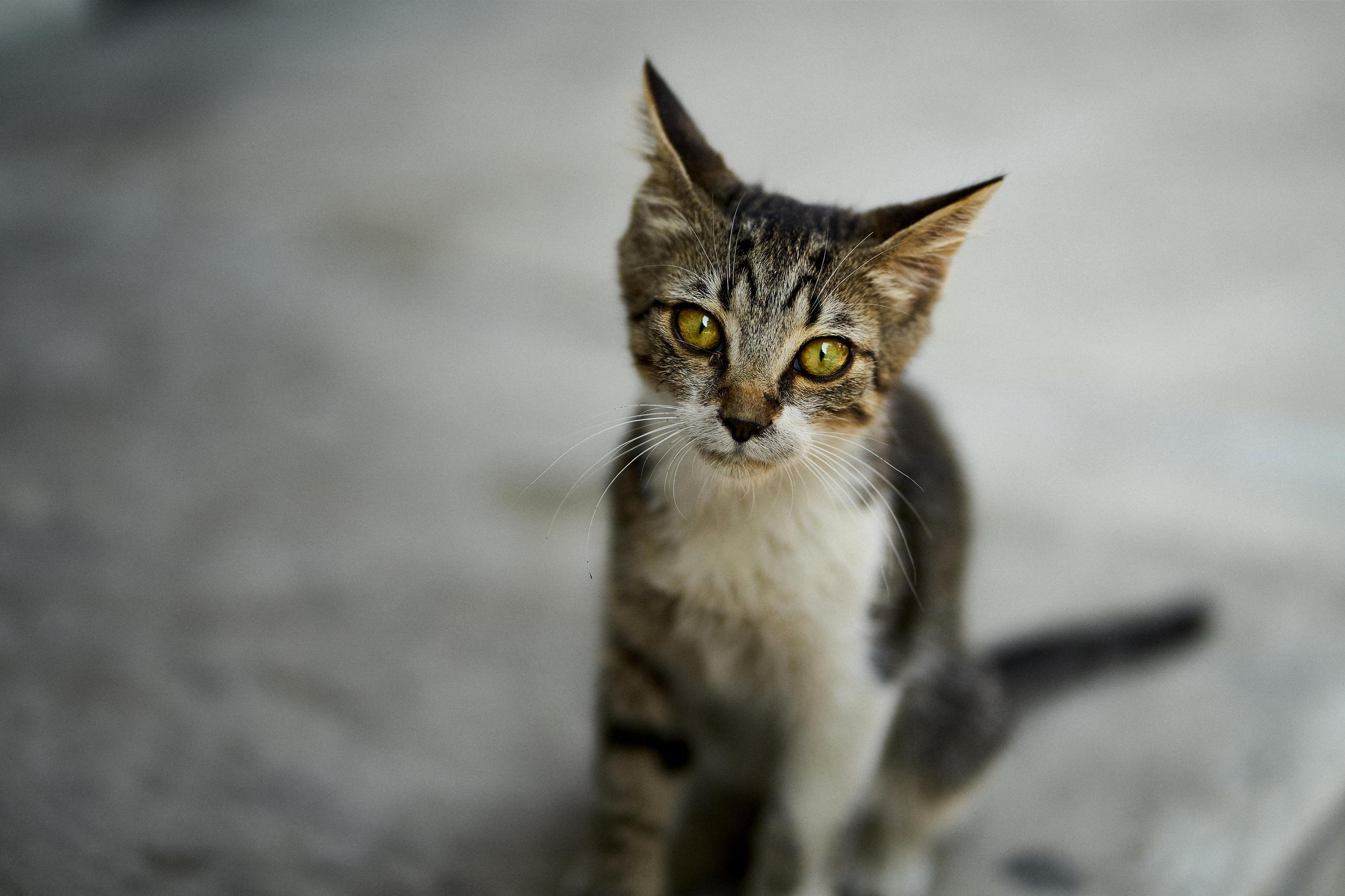 Piercing eyes on the streets of istanbul