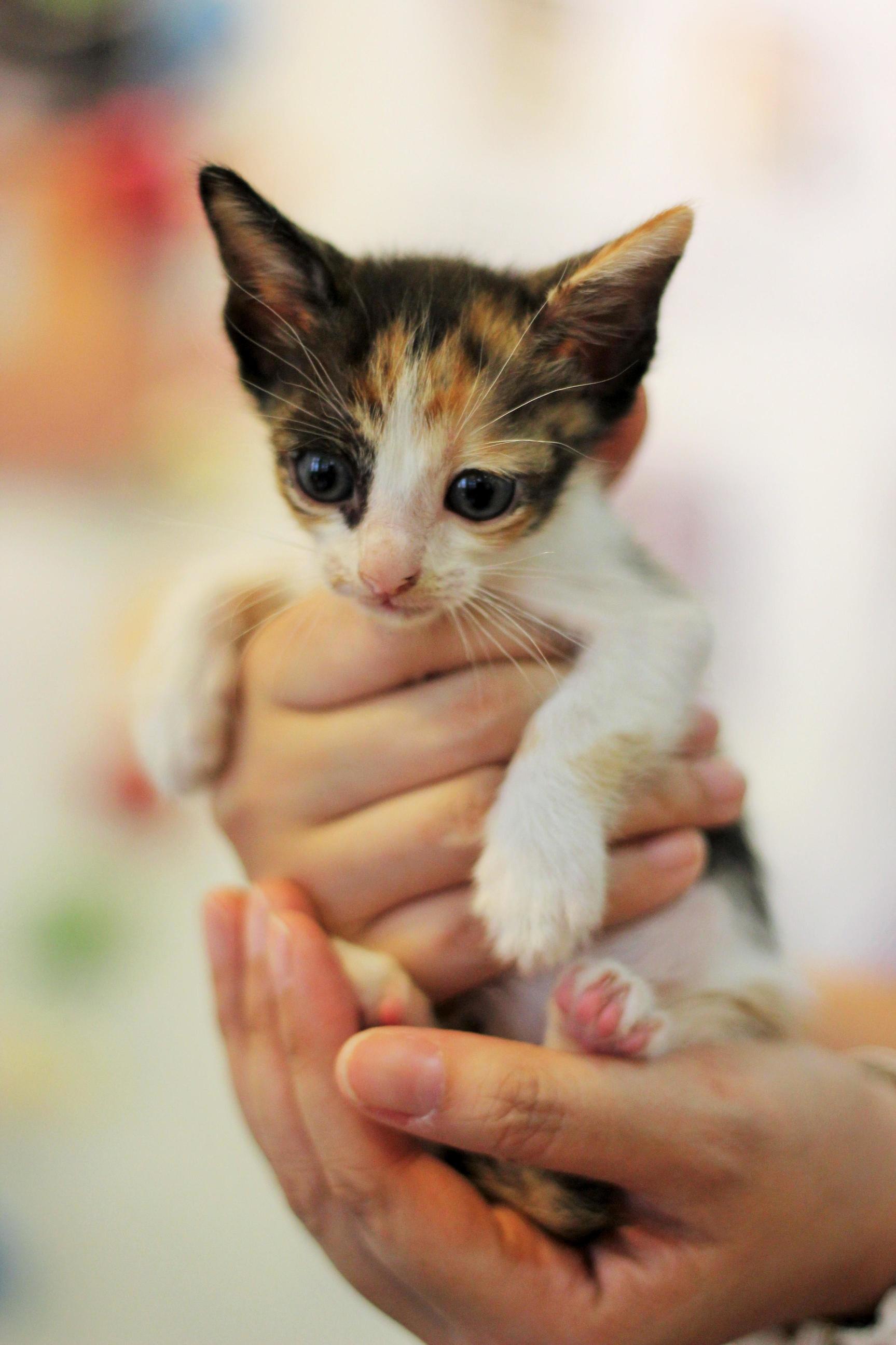 Rescued kitten oc 3456 x 5184