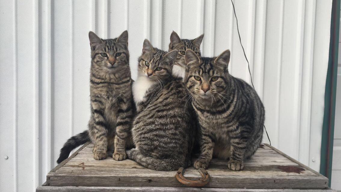 The sweetest barn kitties in kentucky