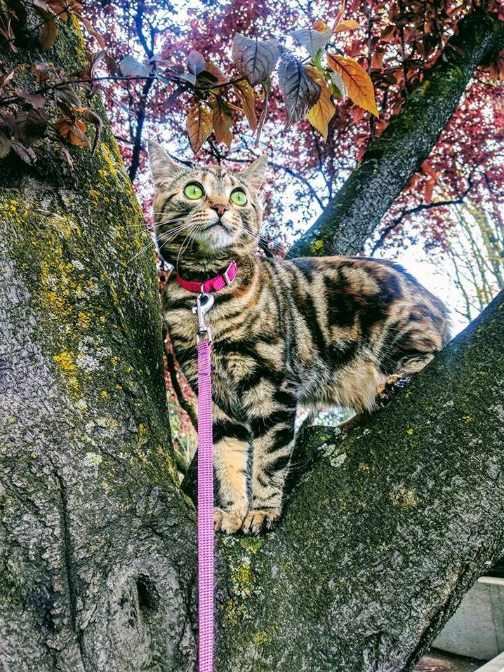 This is lil baby. she likes trees.