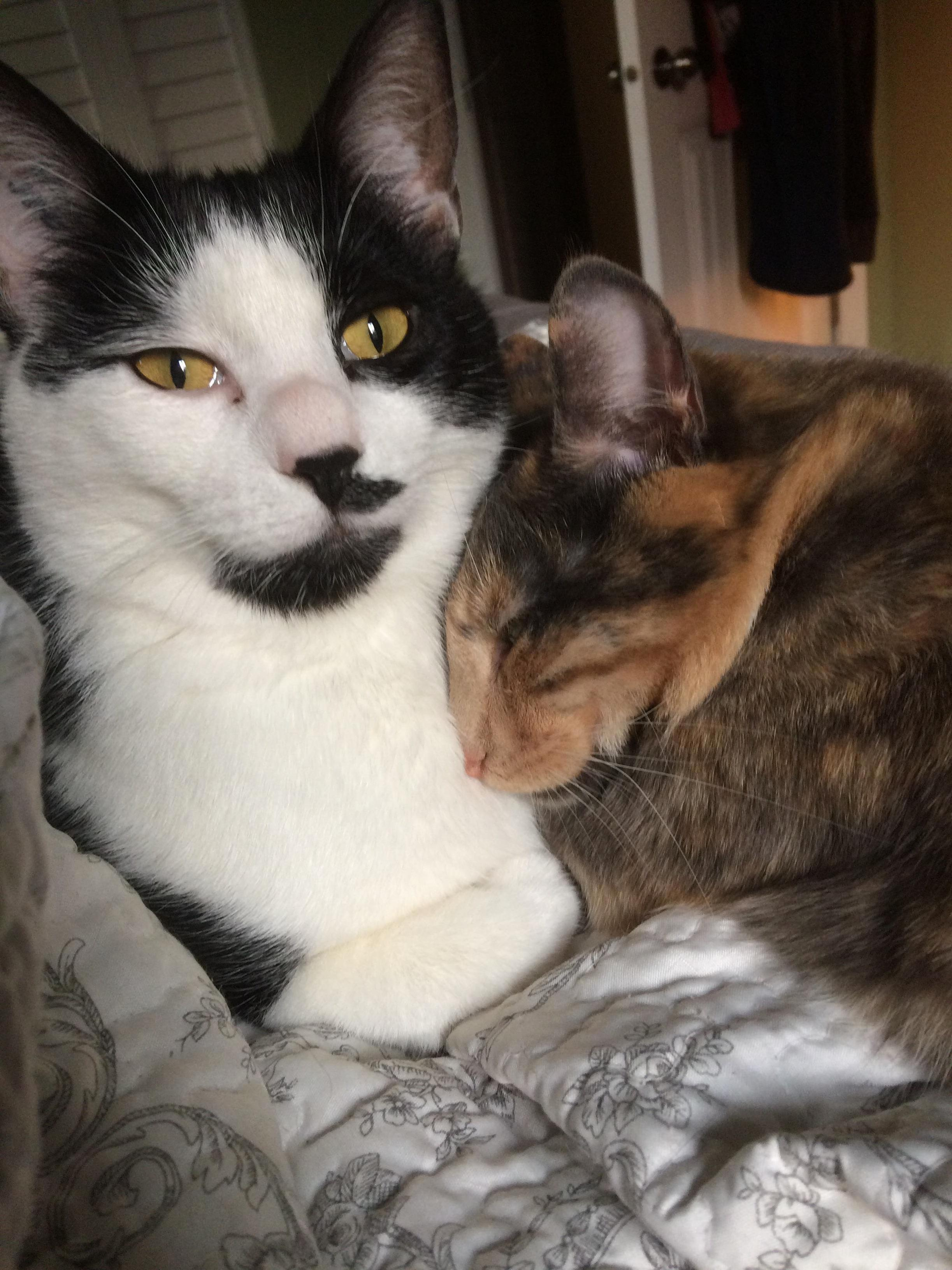 Todays cat pic is brought to you by tommie and june