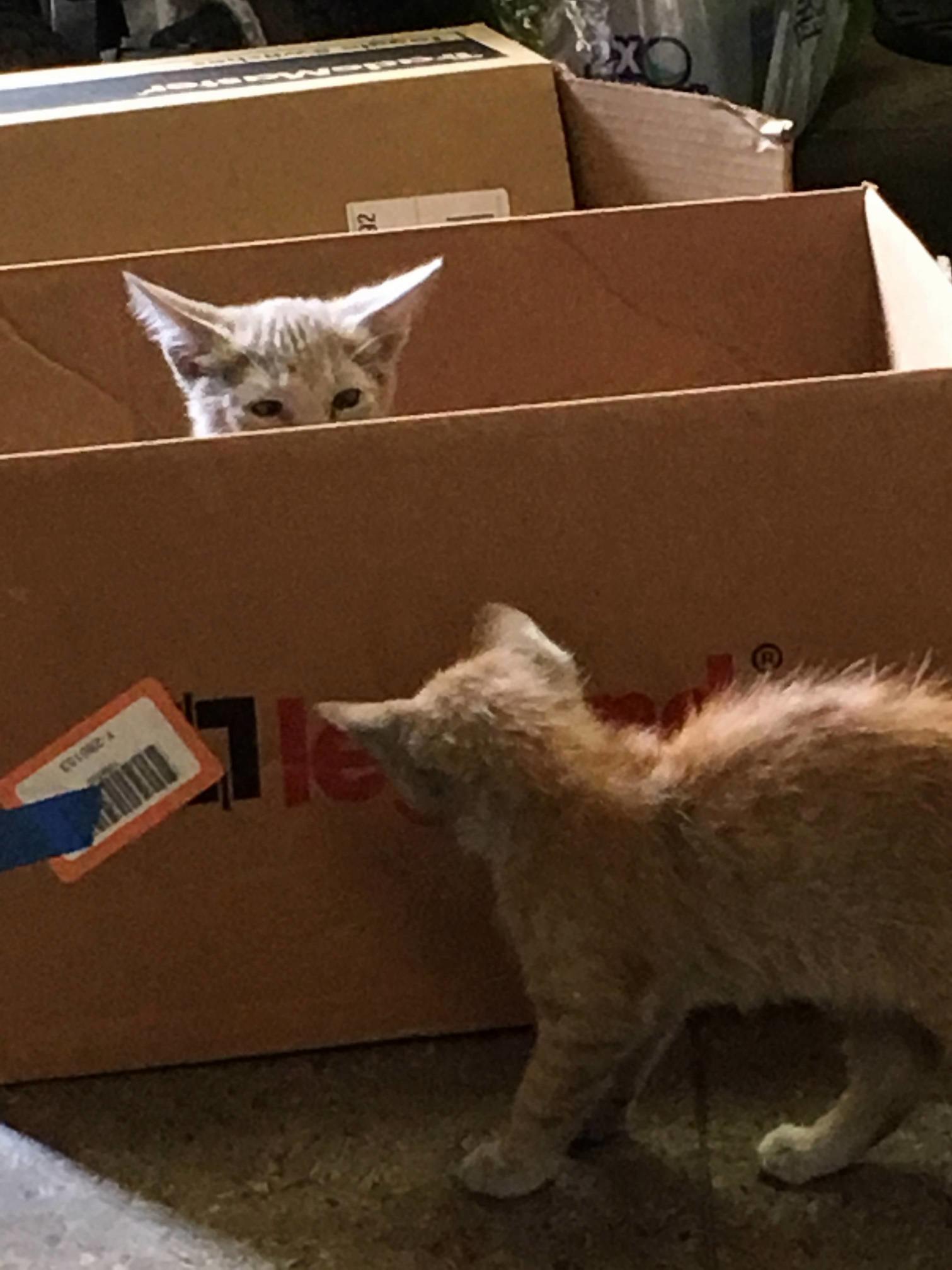 Warehouse security kitties. soon….