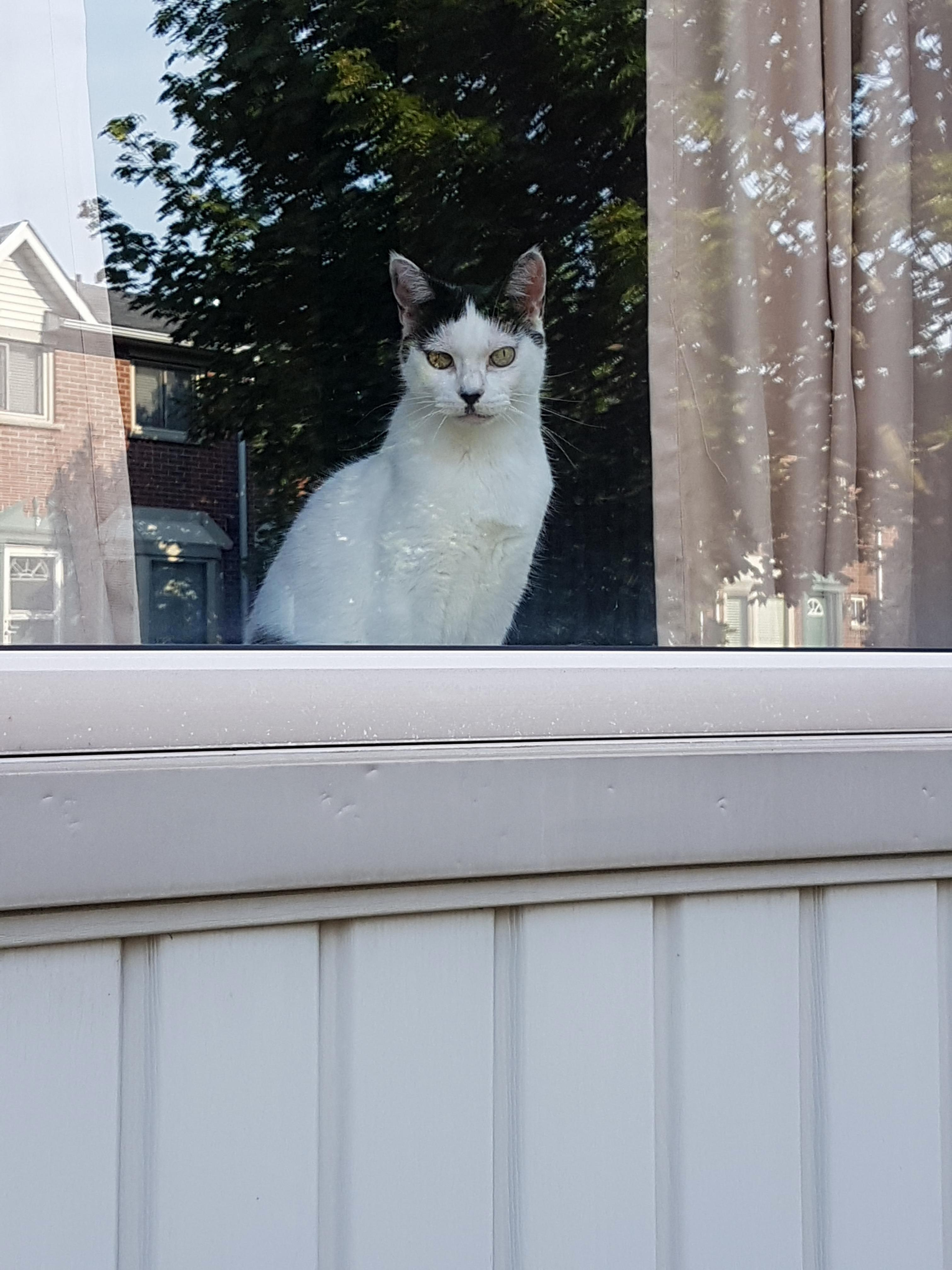 Who do yous ee in my neighbours cat remind you of antone