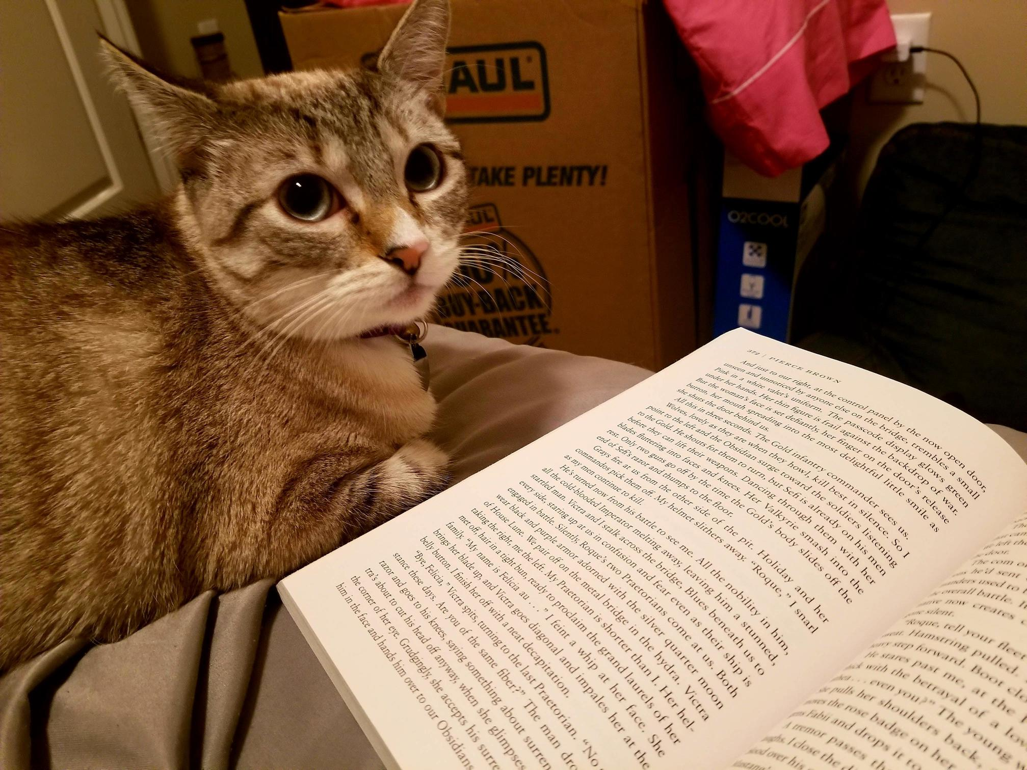 Zoey appreciates good literature. she thinks i read slow but always waits patiently for me to turn the page.