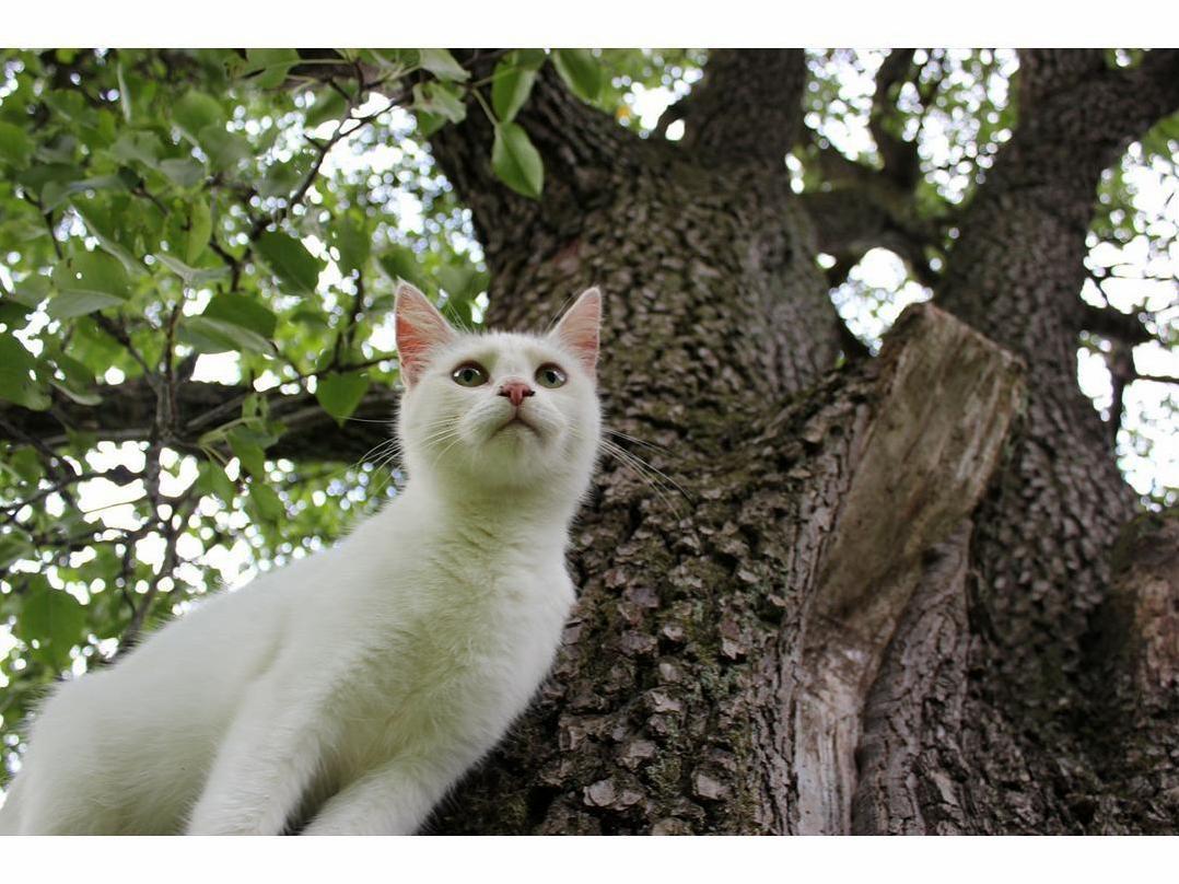 Artemis climbing trees
