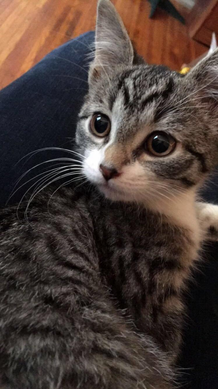 Dexter when he was a kitten!
