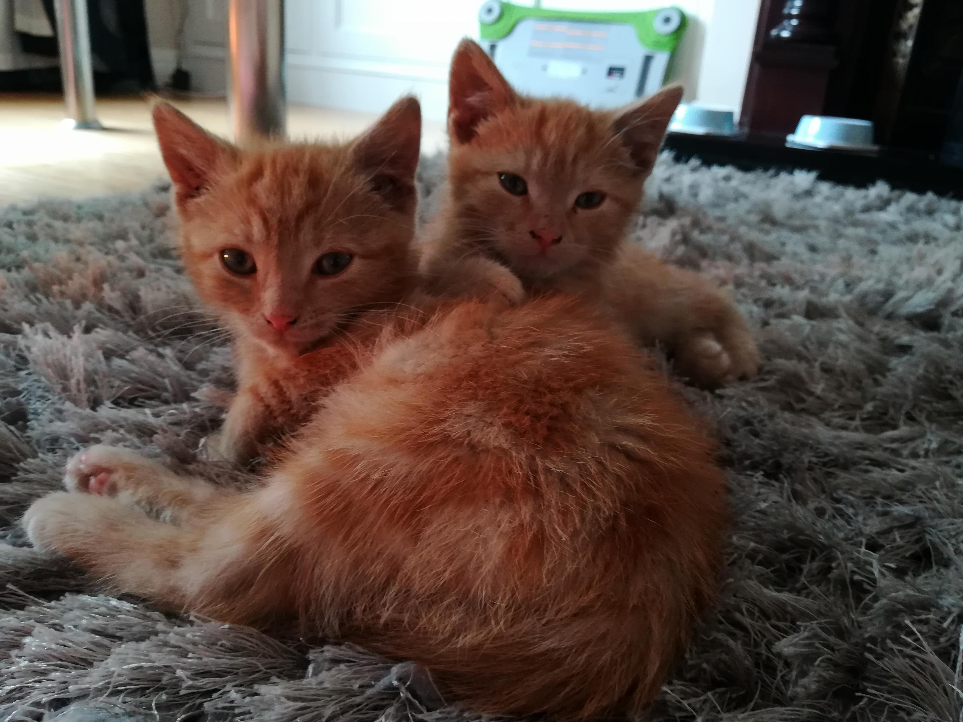 Foster kittens off to their new home!