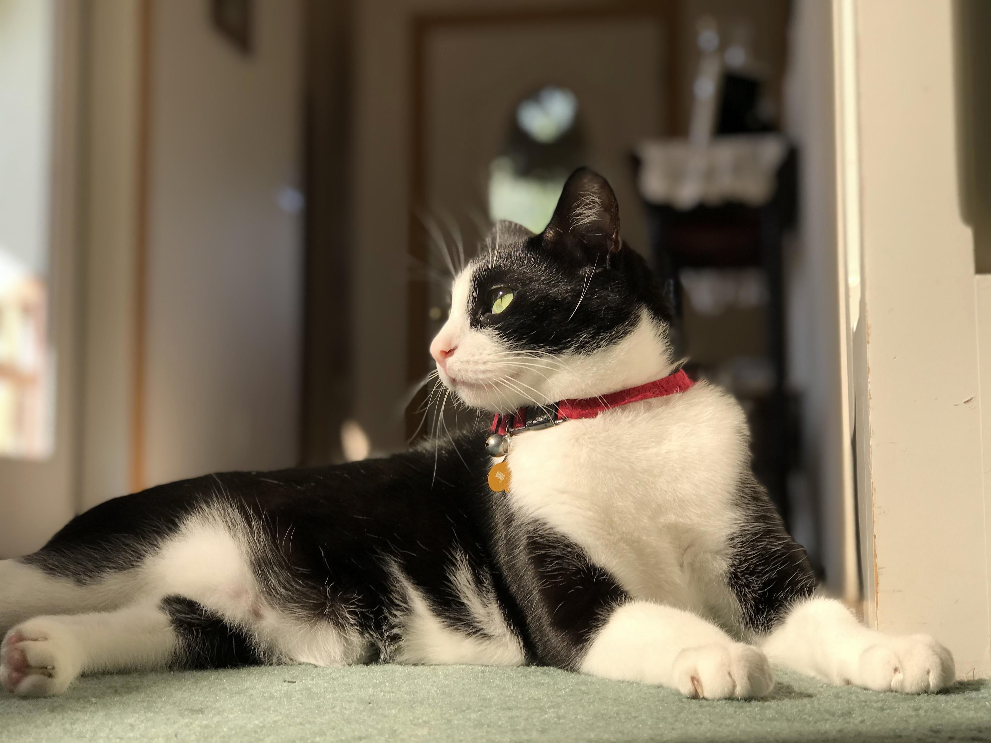 5 Inspirasi Nama Untuk Kucing Peliharaan Di Hari Valentine 14 Februari 2019 Penuh Makna Berkesan Halaman All Tribun Kaltim