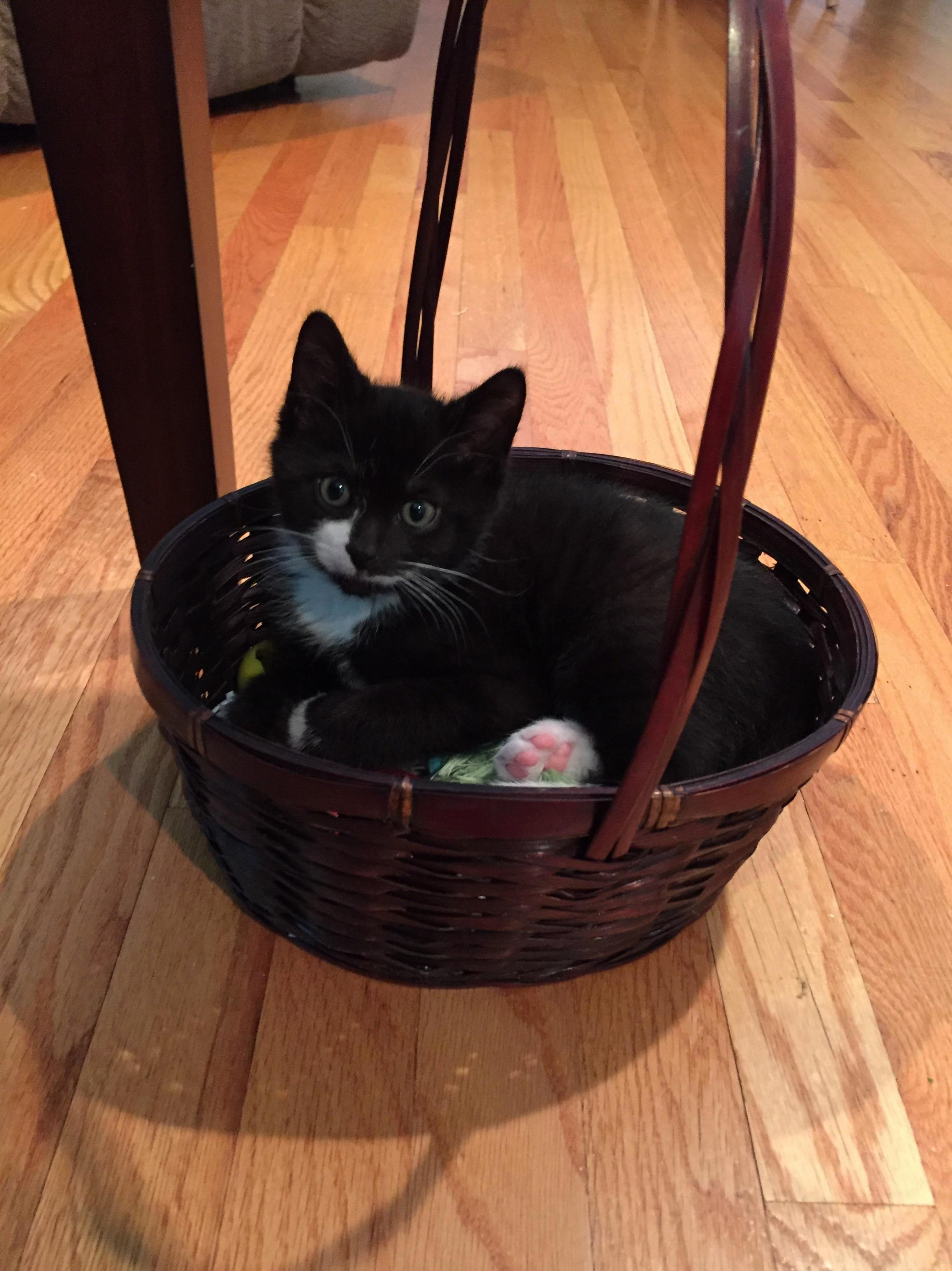 Little silvio thinks the toy basket is his bed