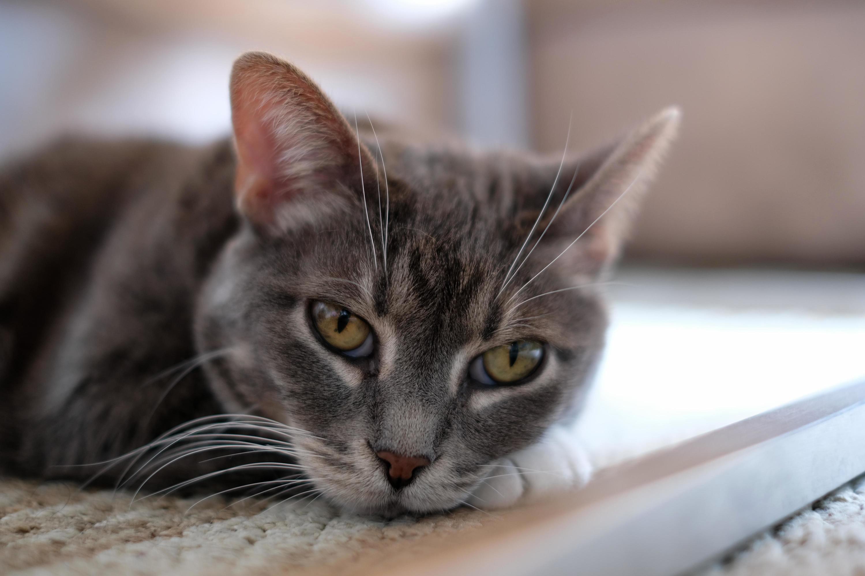 Meet mukkuru, 11 year old kitten