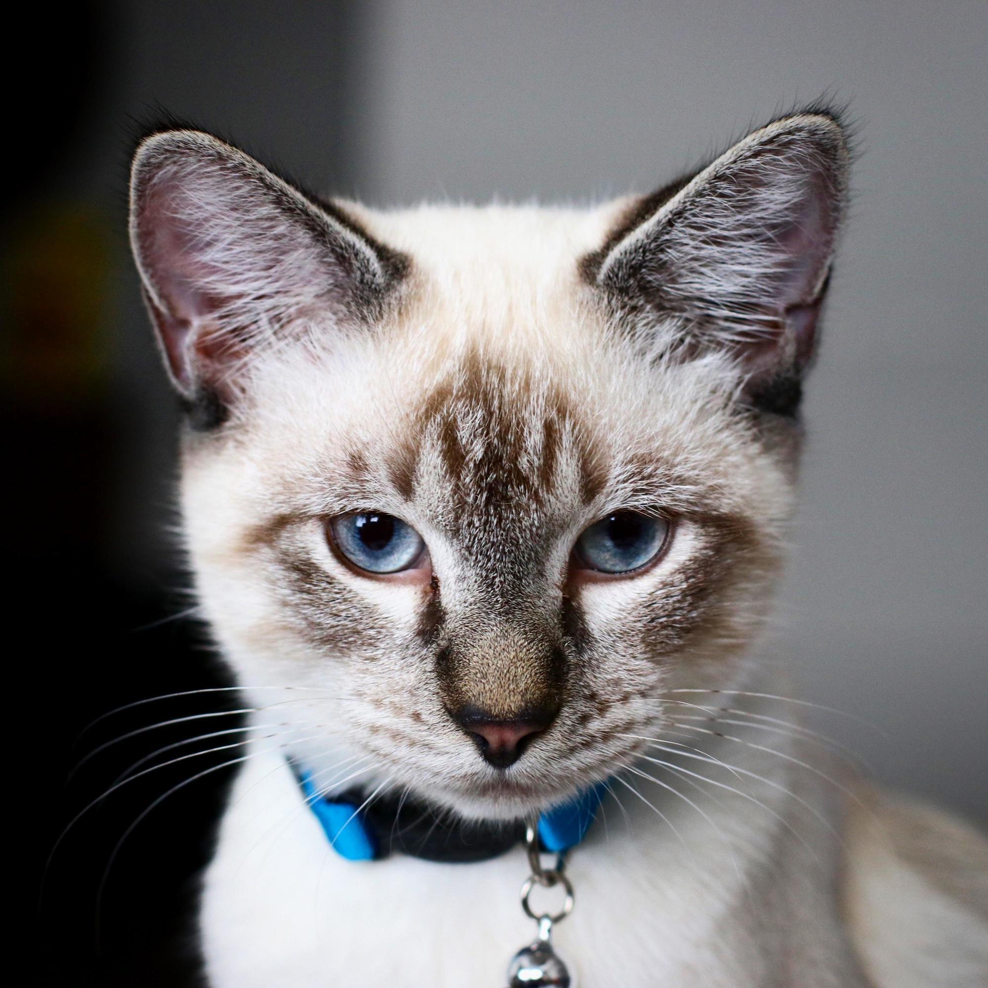 My cat is a linkedin premium member.