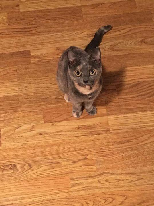 My indoor kitty ran away today. need some positive vibes!