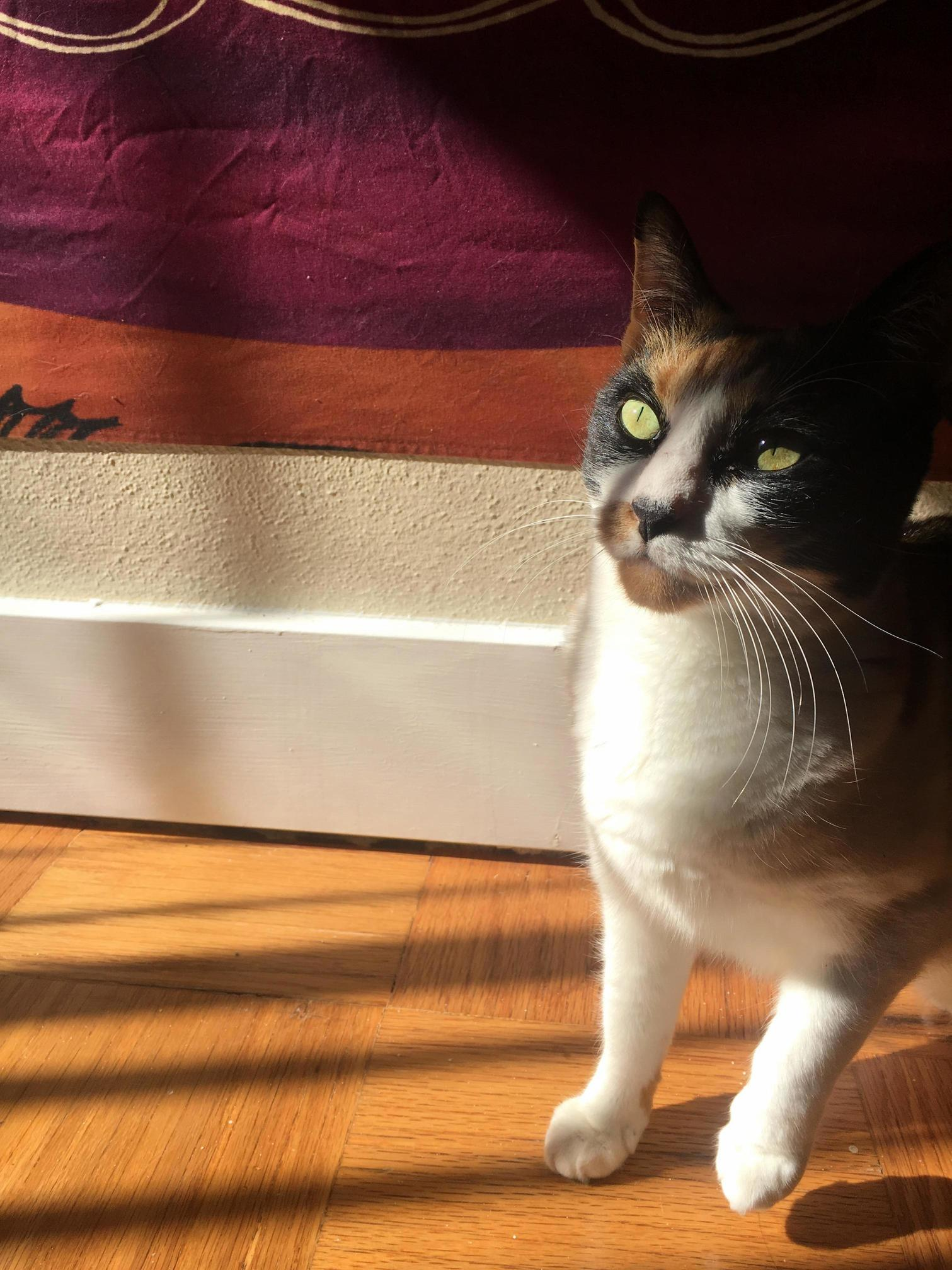 My sister took this awesome pic of our calico, leila!