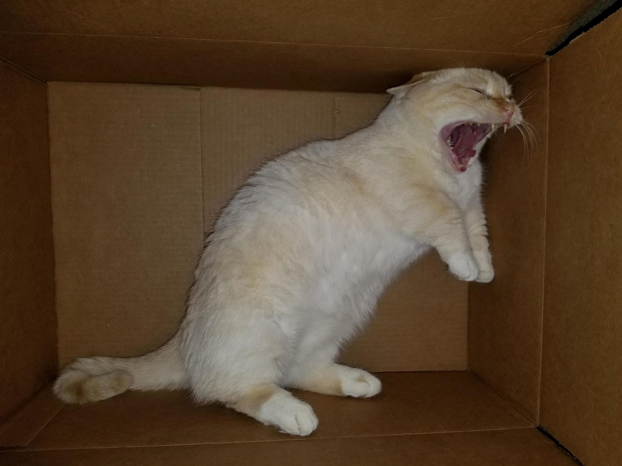 Rarrr cat