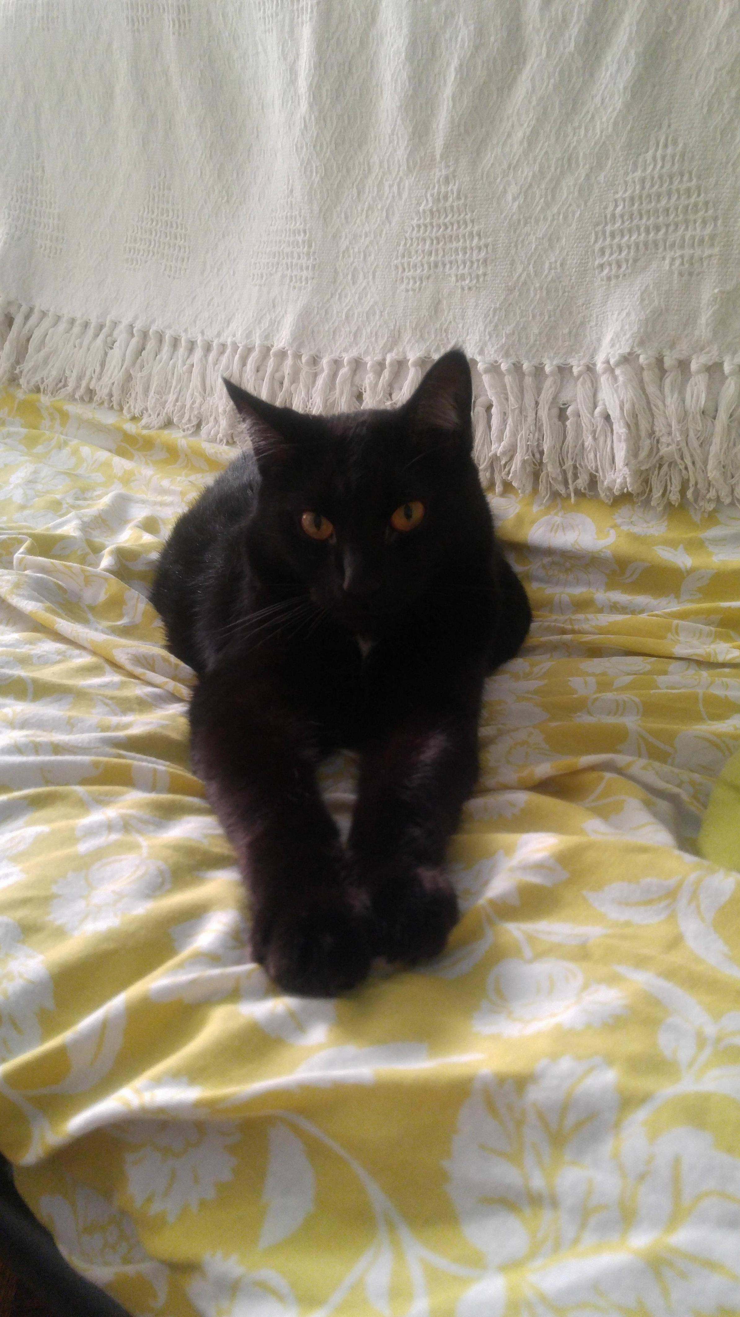 Salem looking sassy