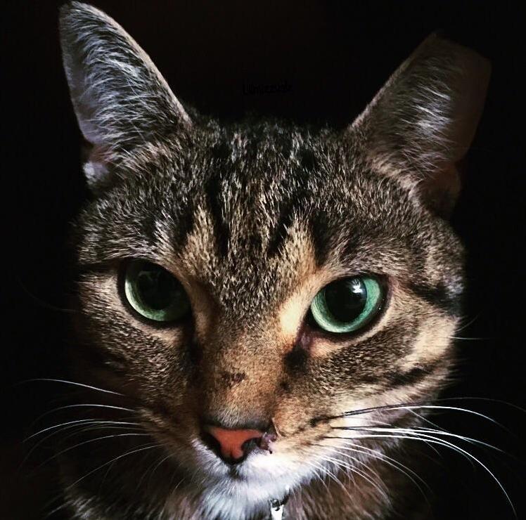 Stare into mayas emerald eyes.