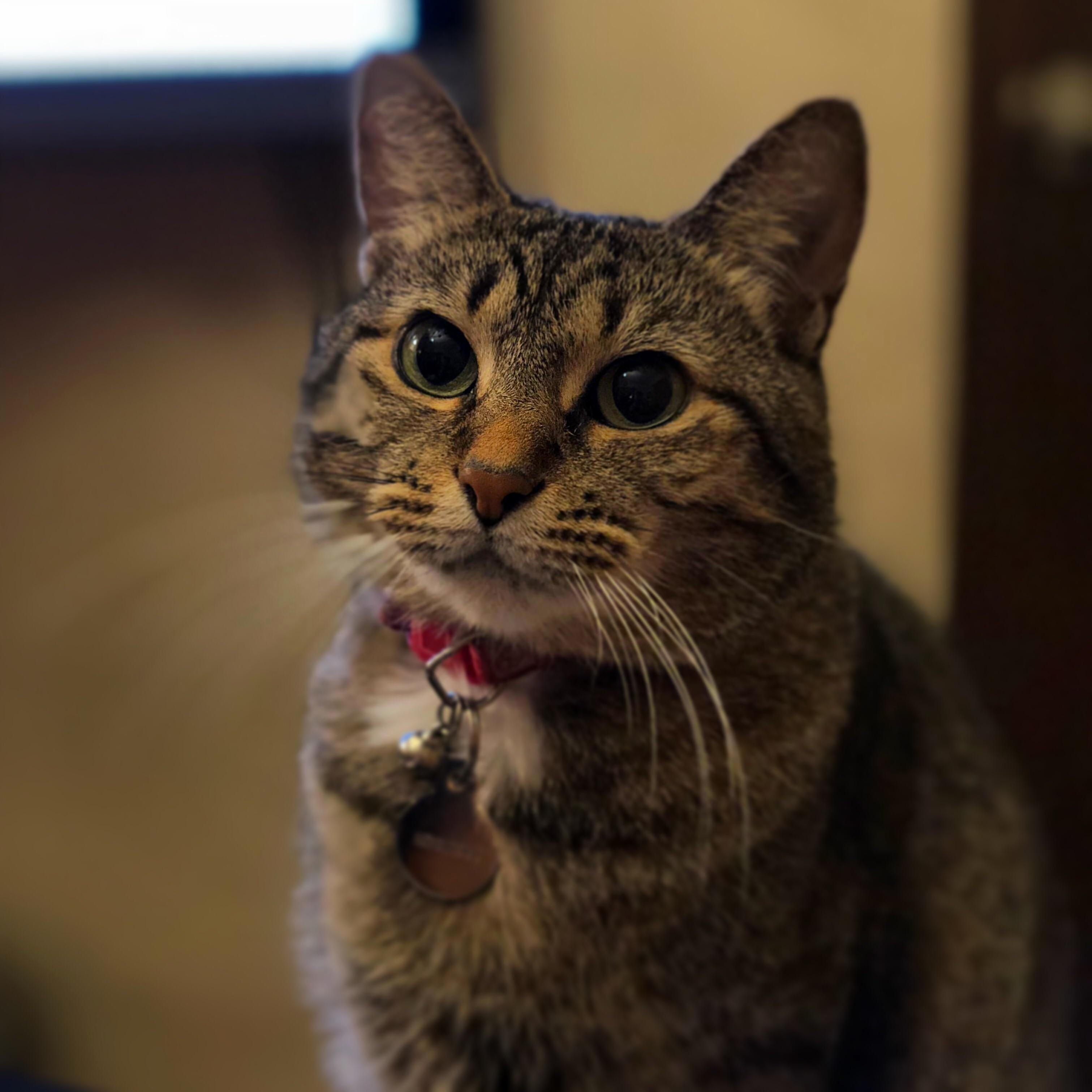 Cat portraits…the main use of my phone