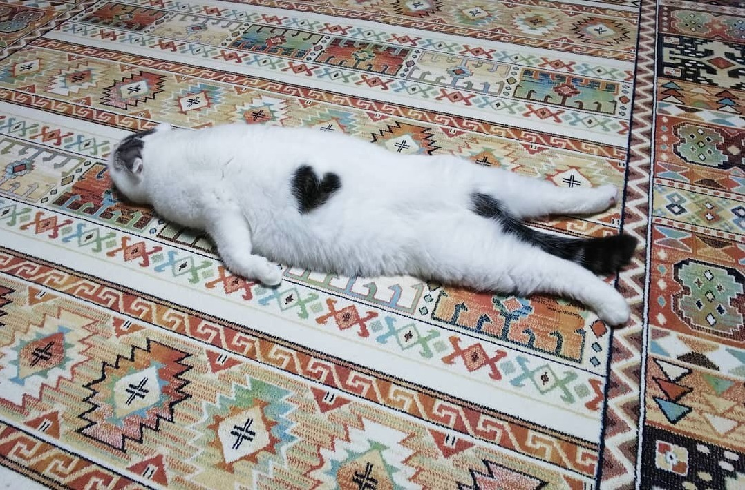 Cat with two hearts splooting (@ojarinn)