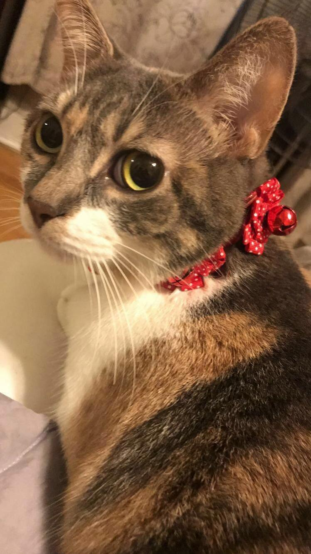 Festive kitten