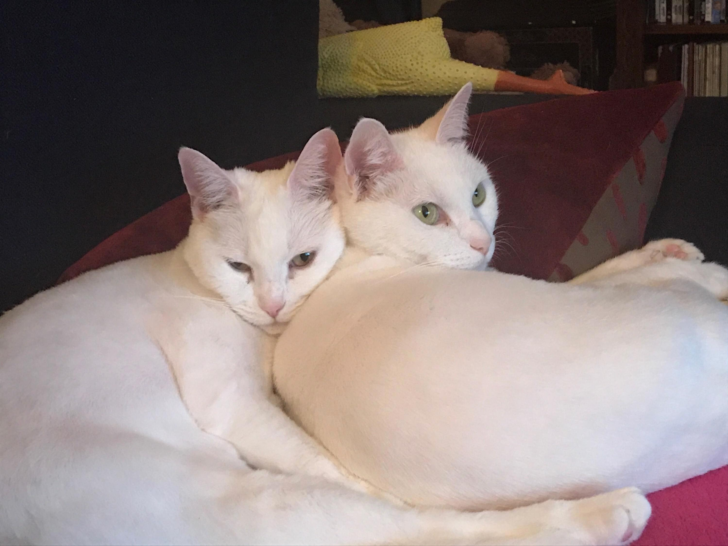 Found my cats doppelgangers on this sub. got excited enough to post for the first time ever!