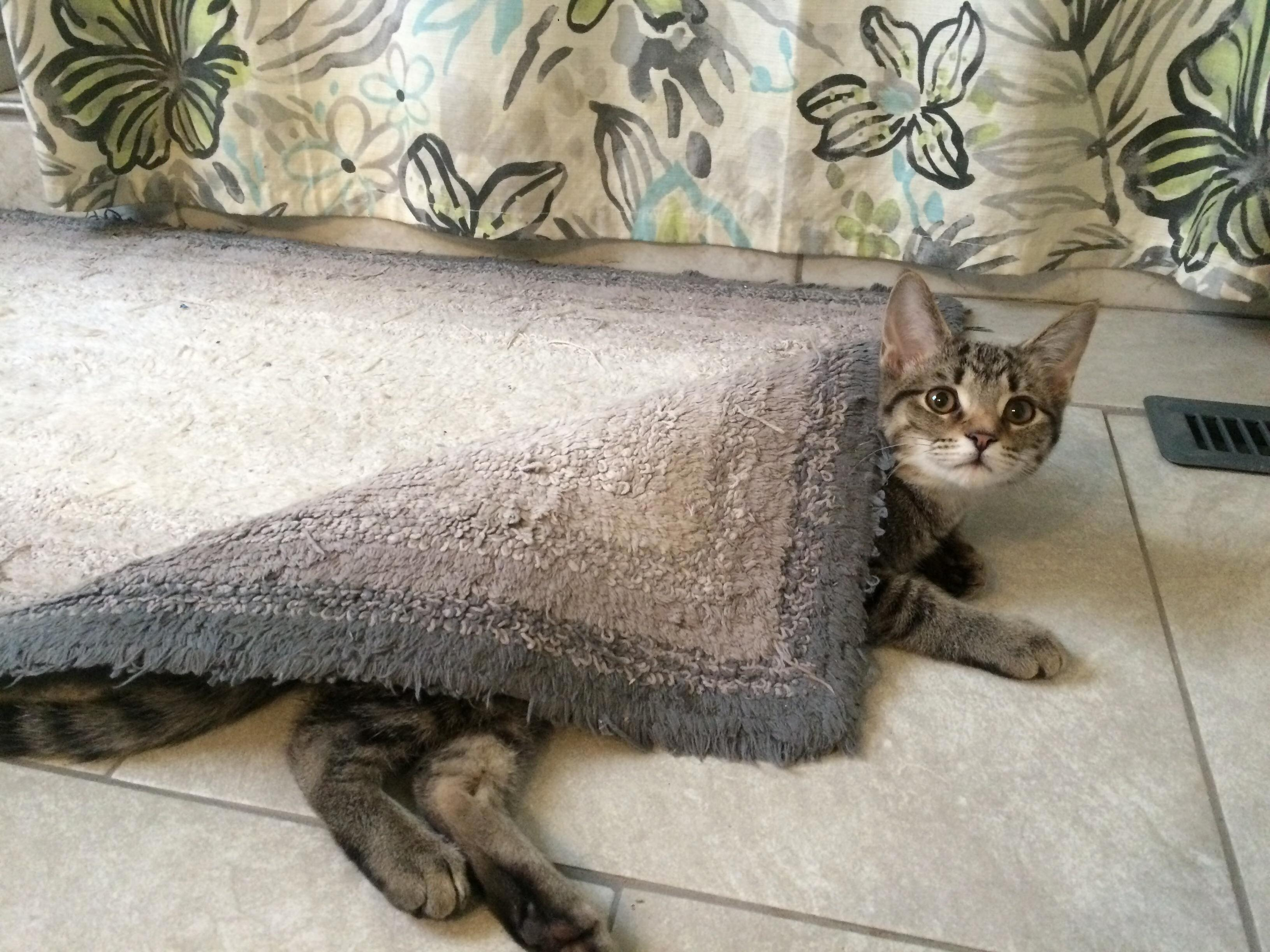 Heated floors in our bathroom, kitten knows its warmer underneath and wraps up like a blanket.