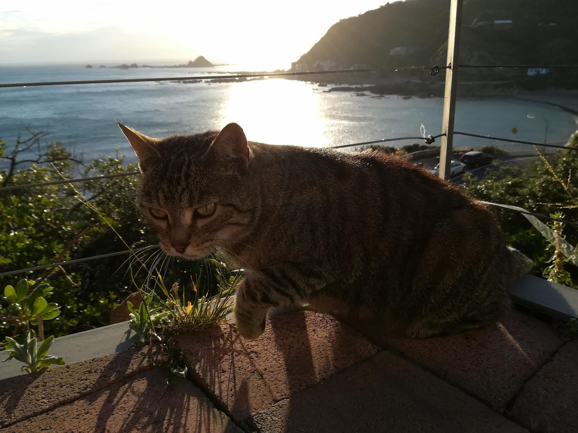 I met a new cat at our staff dinner – super cuddly and photogenic.