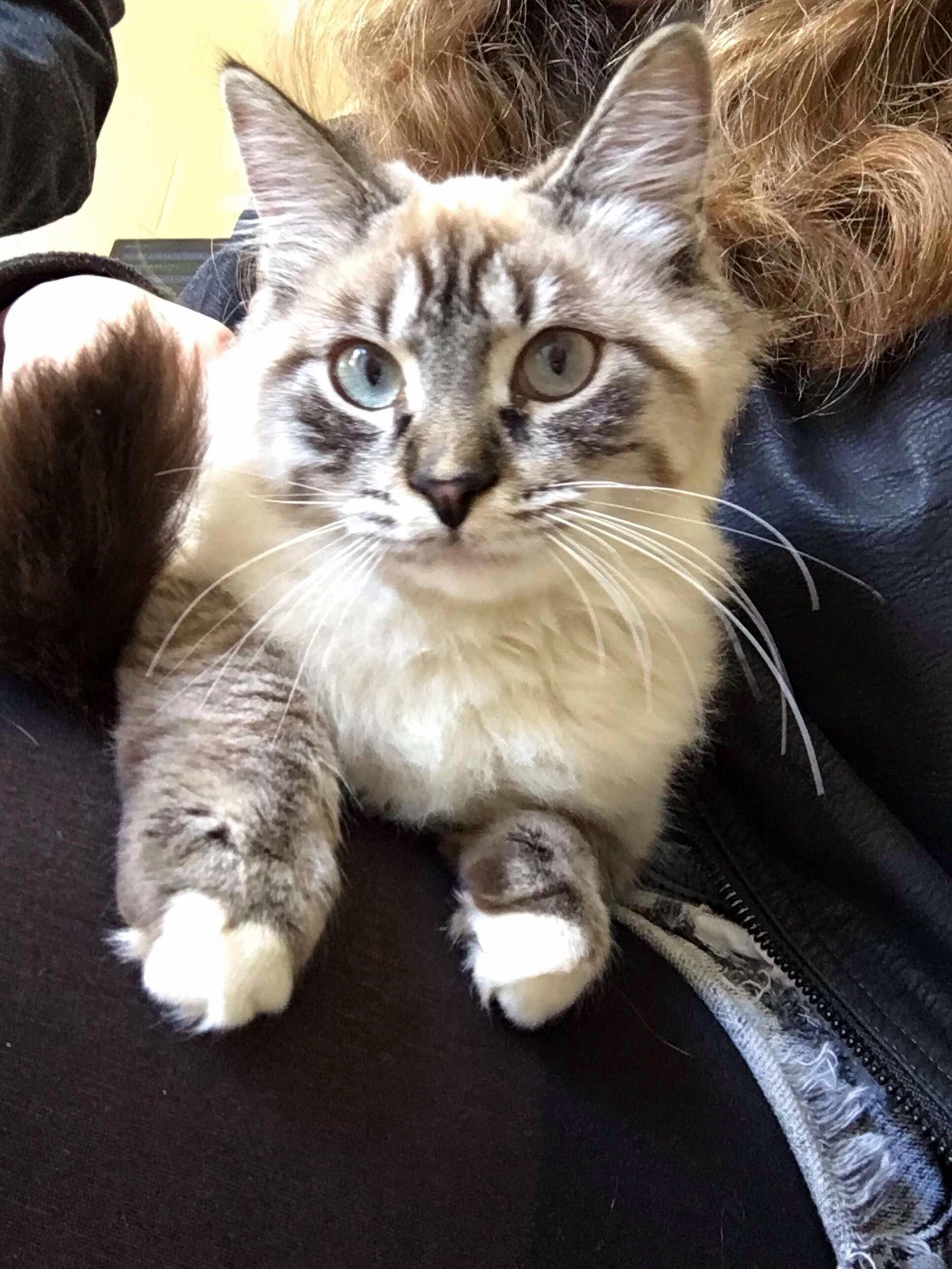 I need help naming this sweet girl i just adopted! she is a lynx mix!