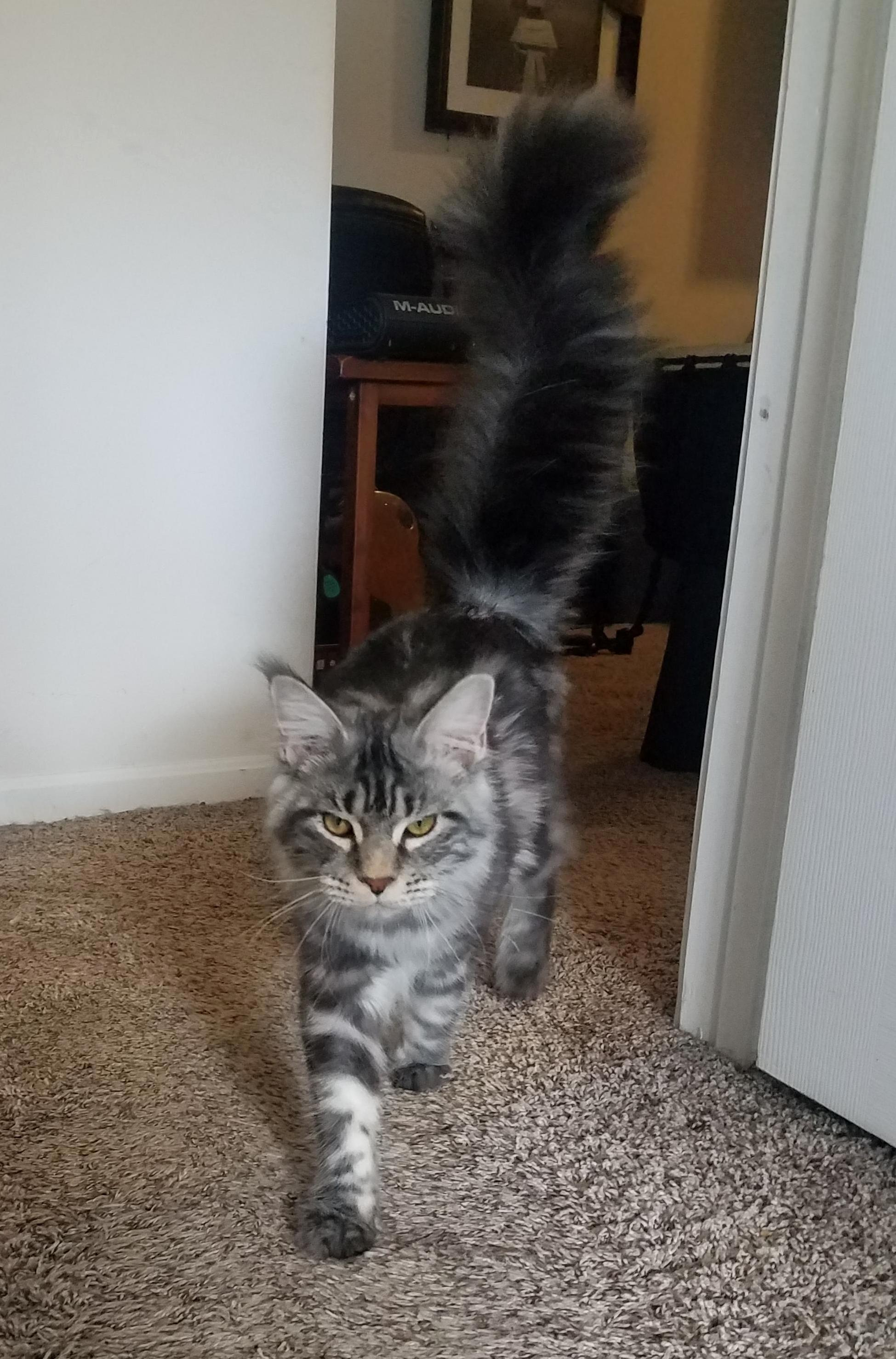 Mega floof tail.