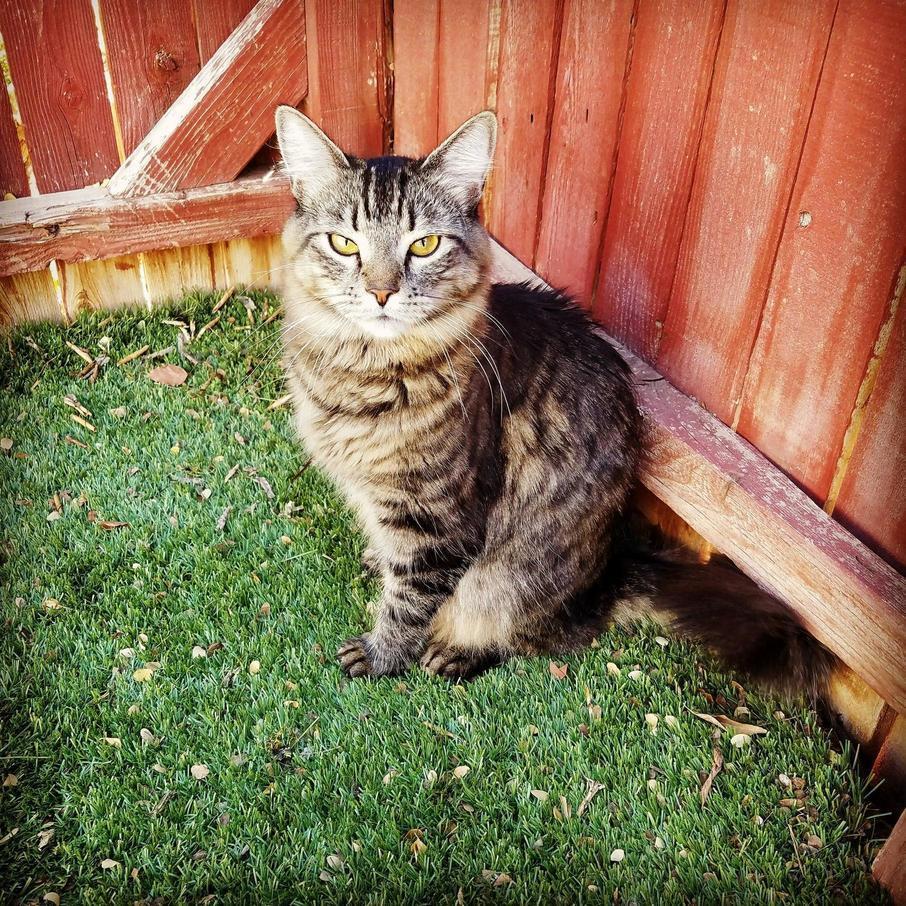 My beautiful boy, nicholai