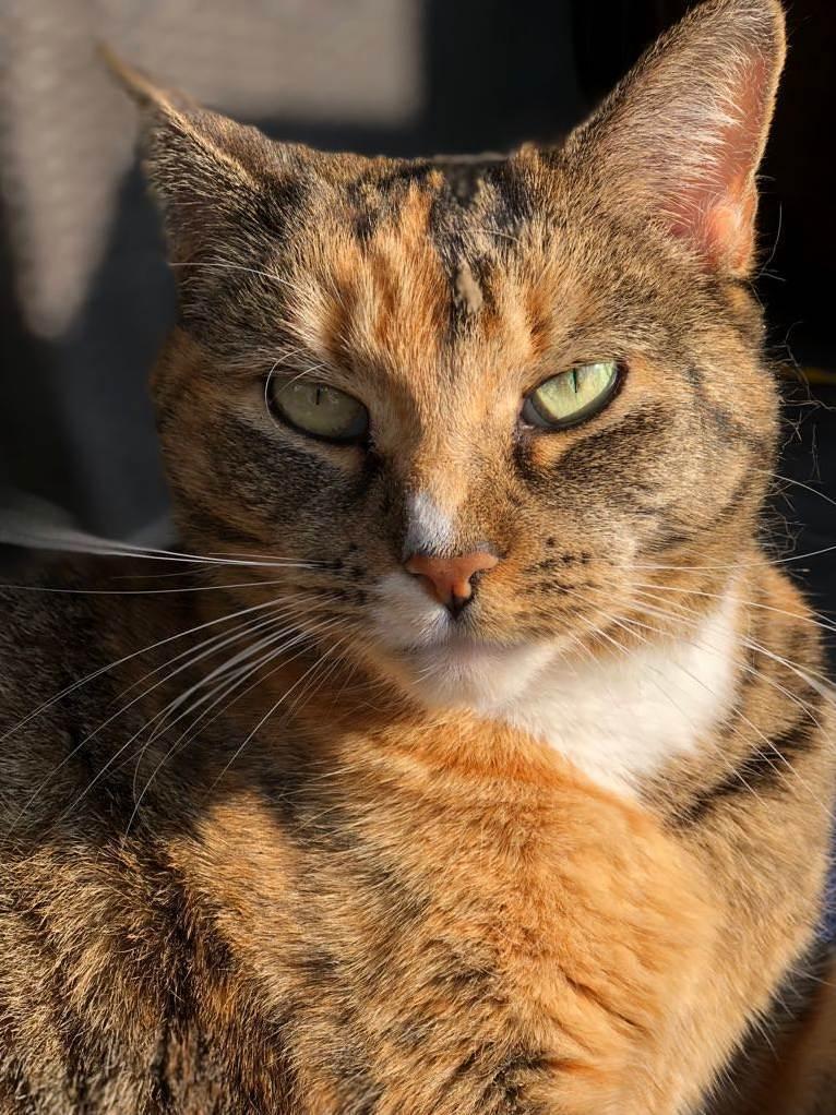 My beautiful outside kitty that chose me