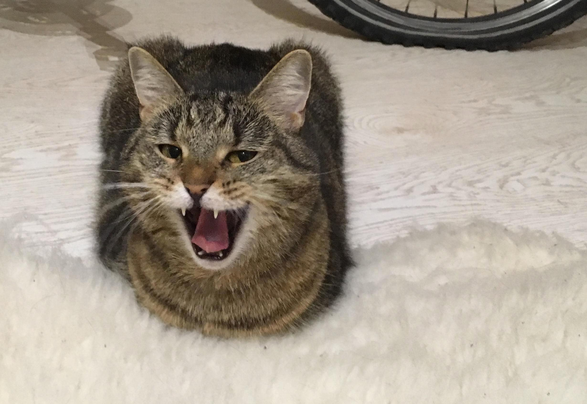 My cat just told me a joke and expects me to laugh