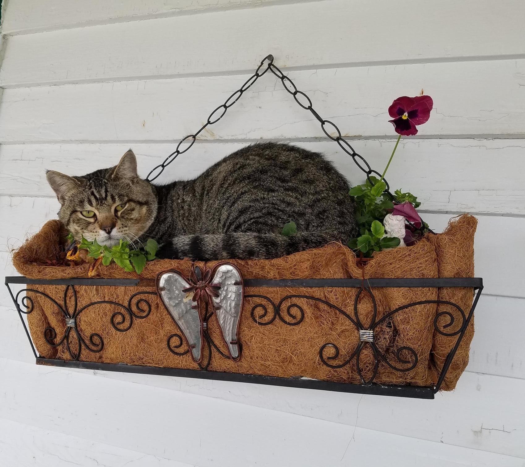 My cat squeakys favorite spot (so much for having flowers)