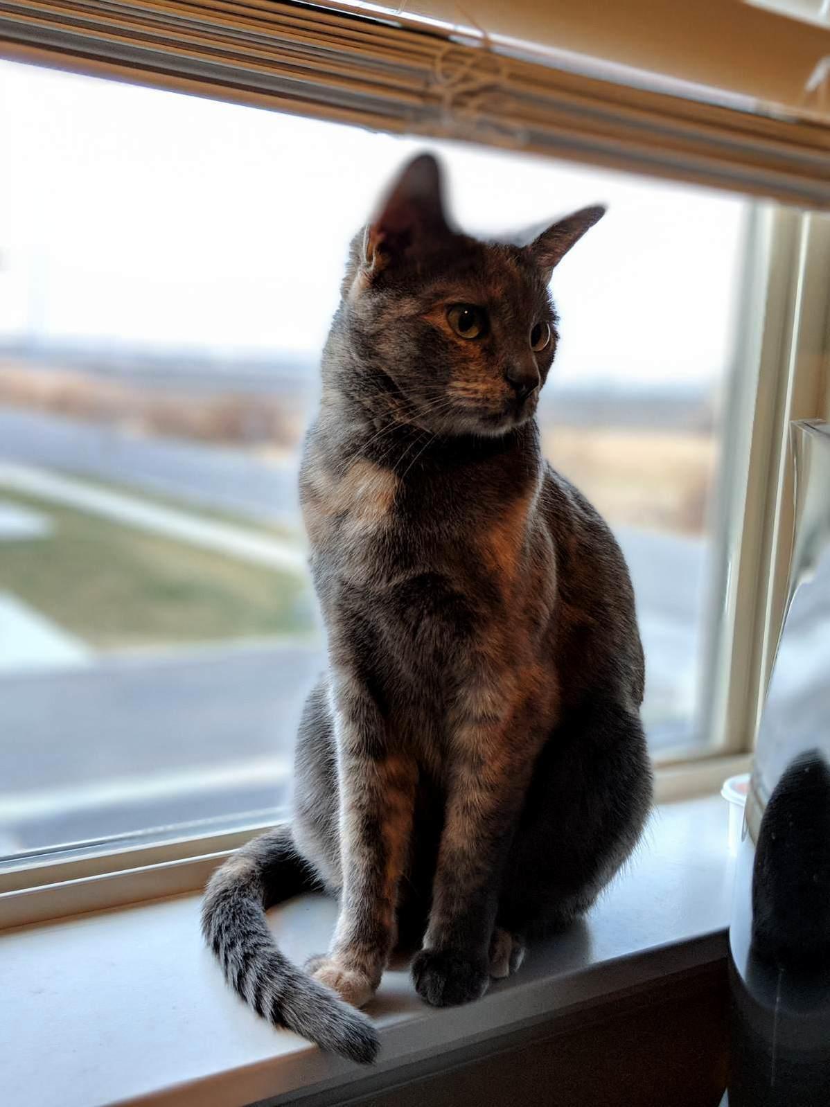 My girl atari. she poses everytime i sit at my desk