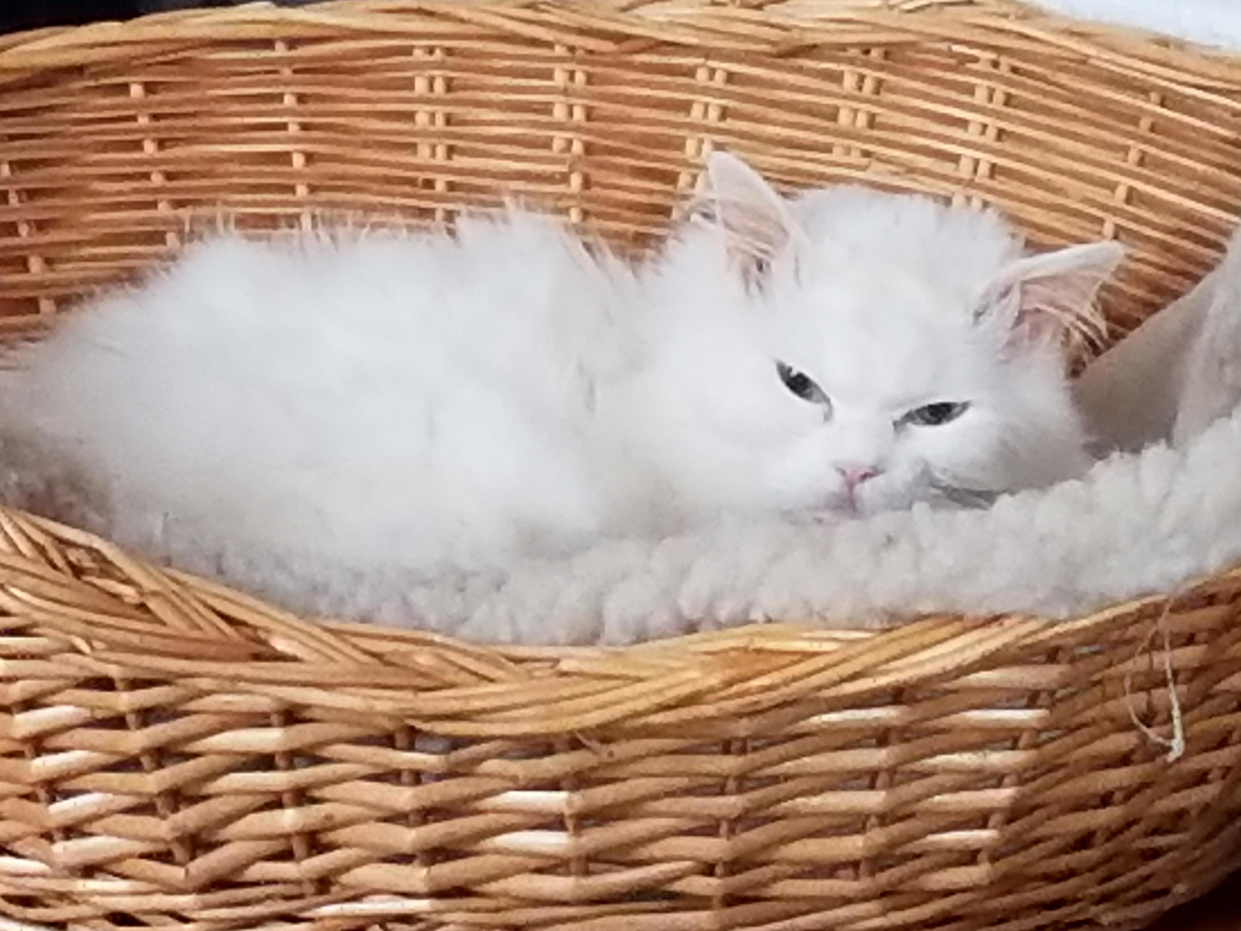 My sleepy christmas kitteh.