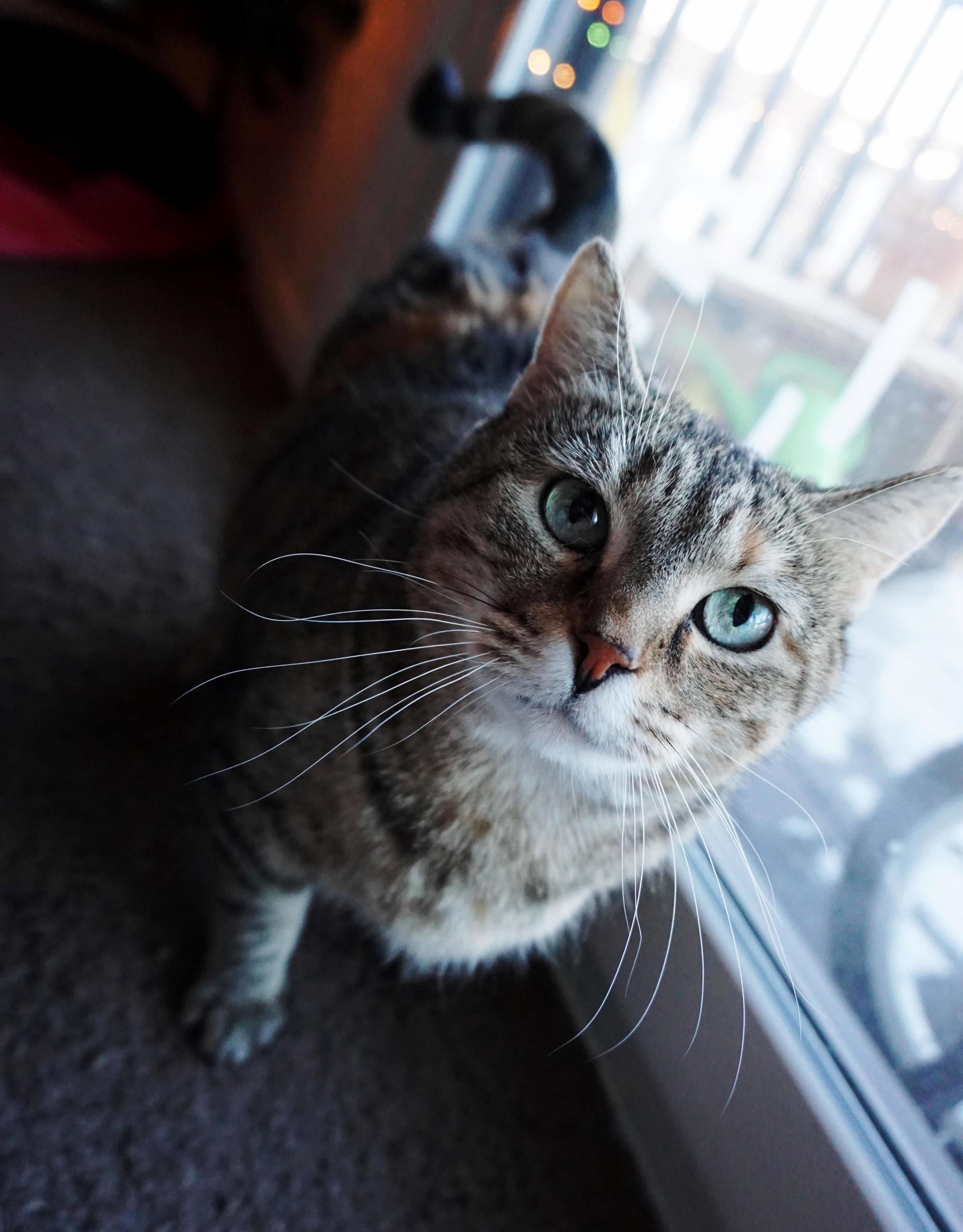 My sweet lana kitty.