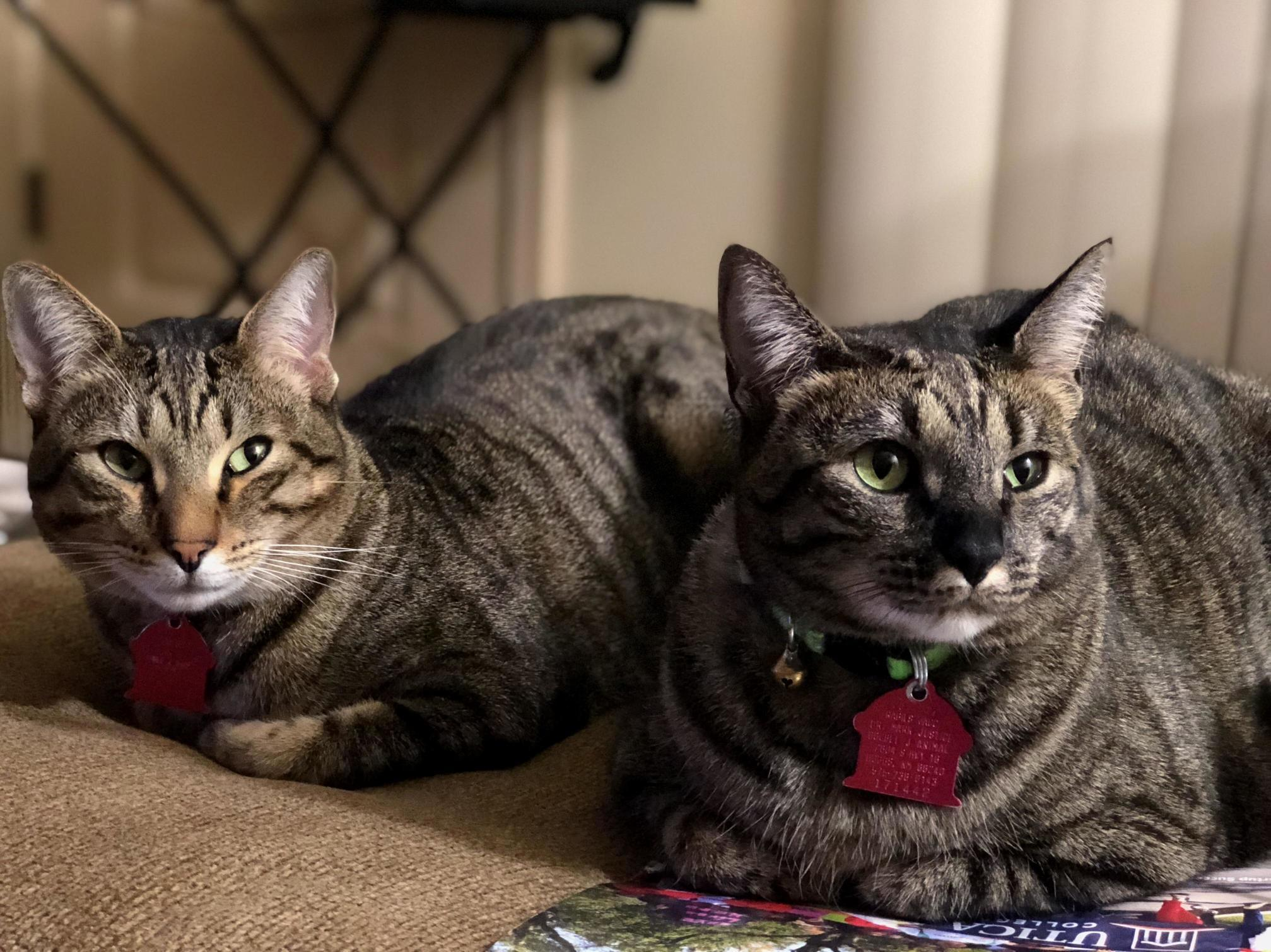 My two beautiful fur babies thor and queen victoria