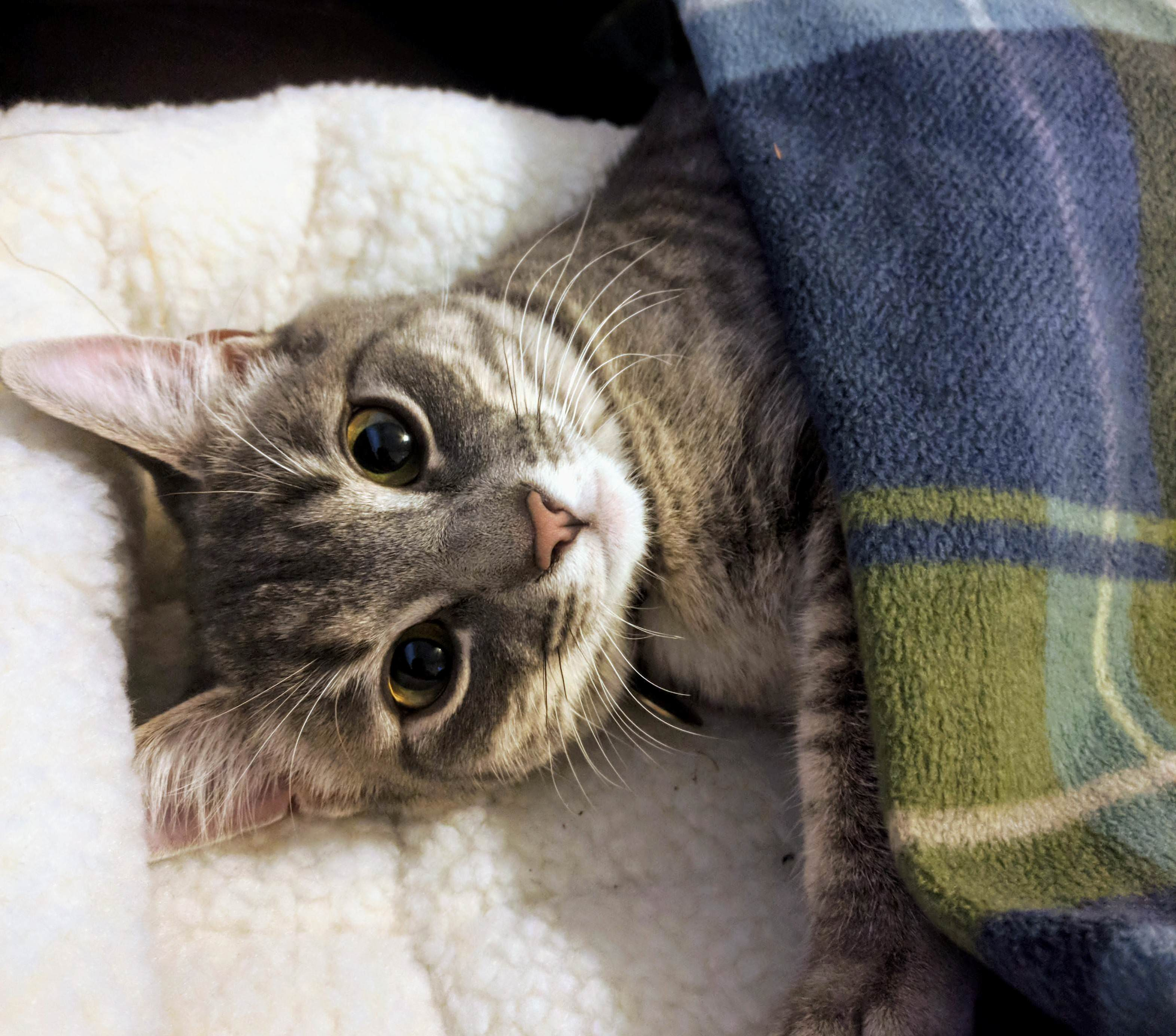 Sabine tucked in before the snow storm this morning