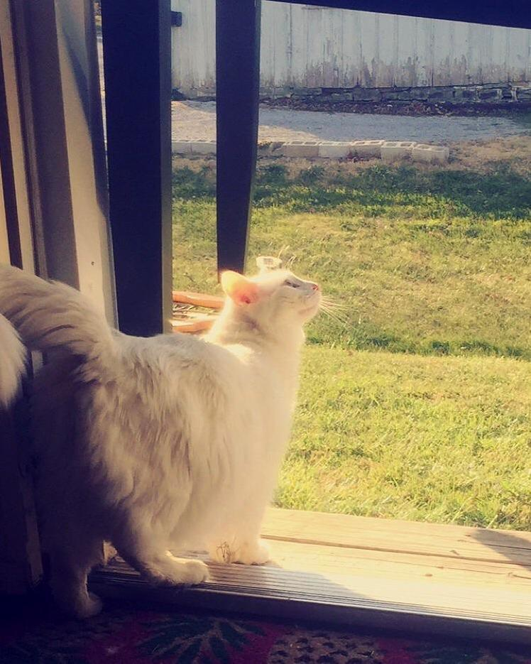 Saoirse tentatively checks out the outside world.