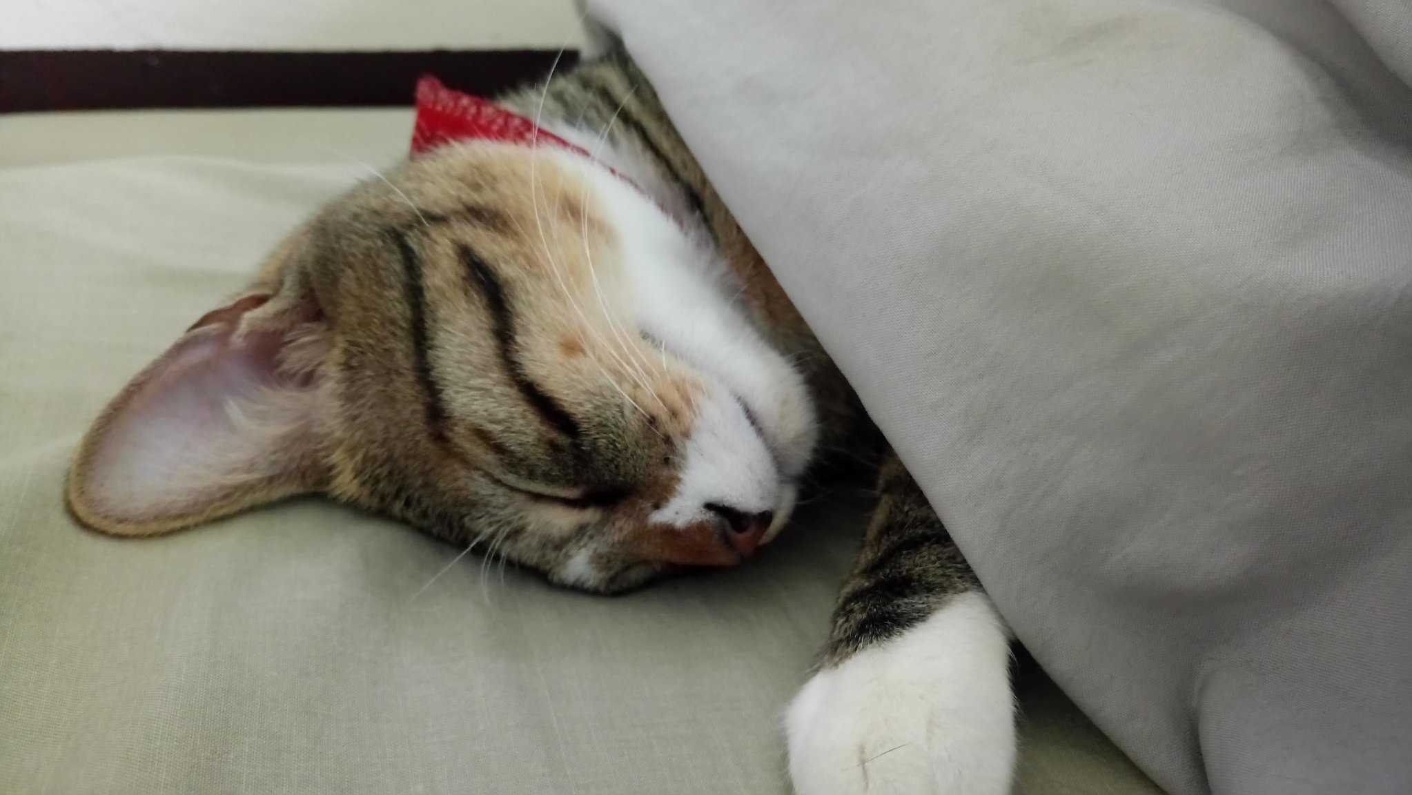 Sleeping kitty is sleeping