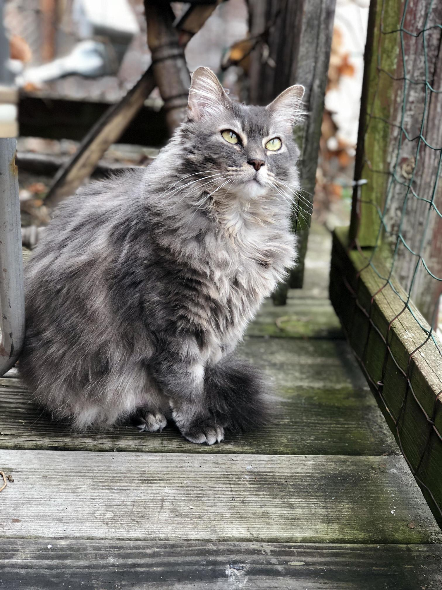 This majestic floof is my favourite thing to photograph.
