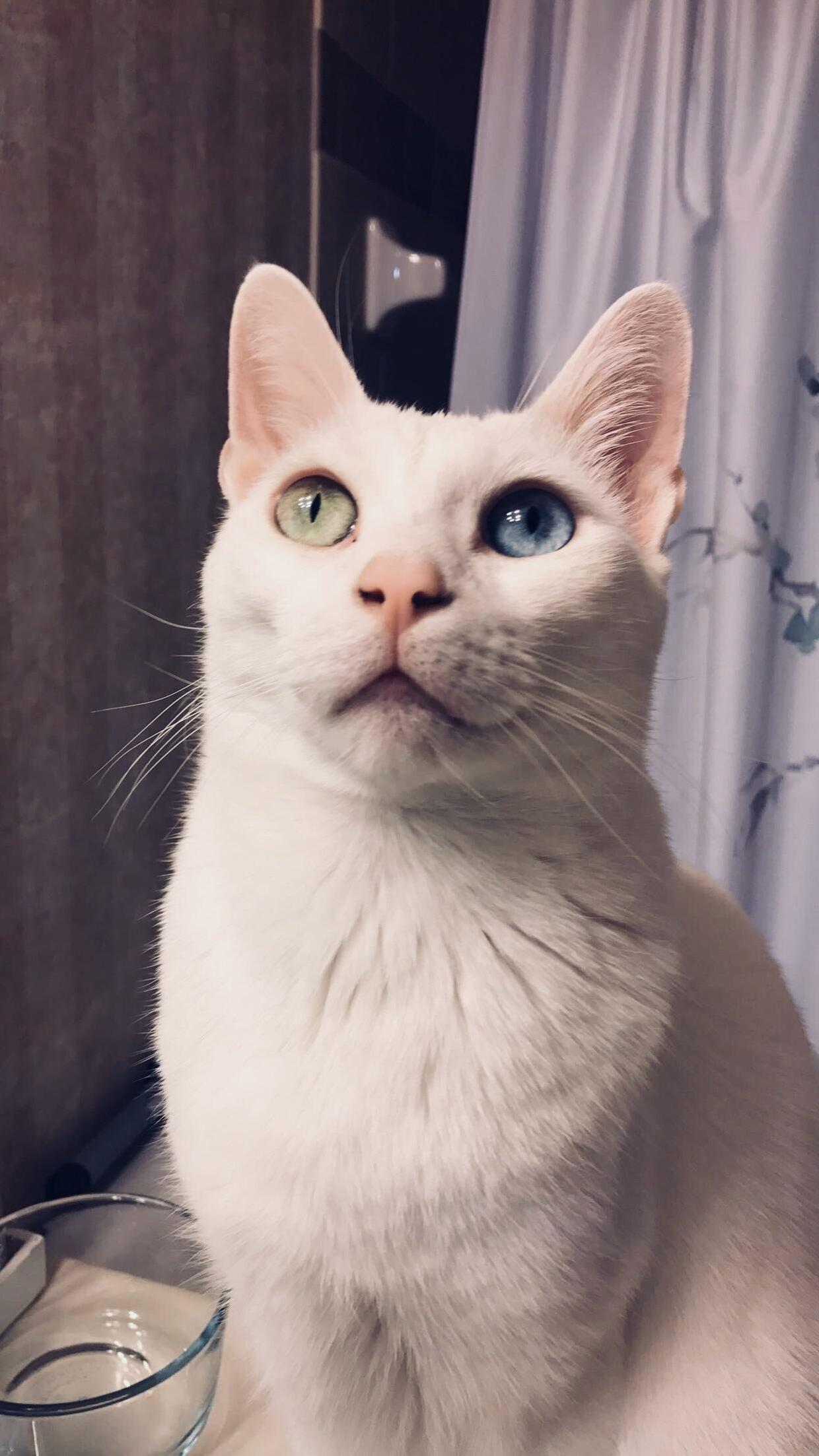 Tucker has heterochromia