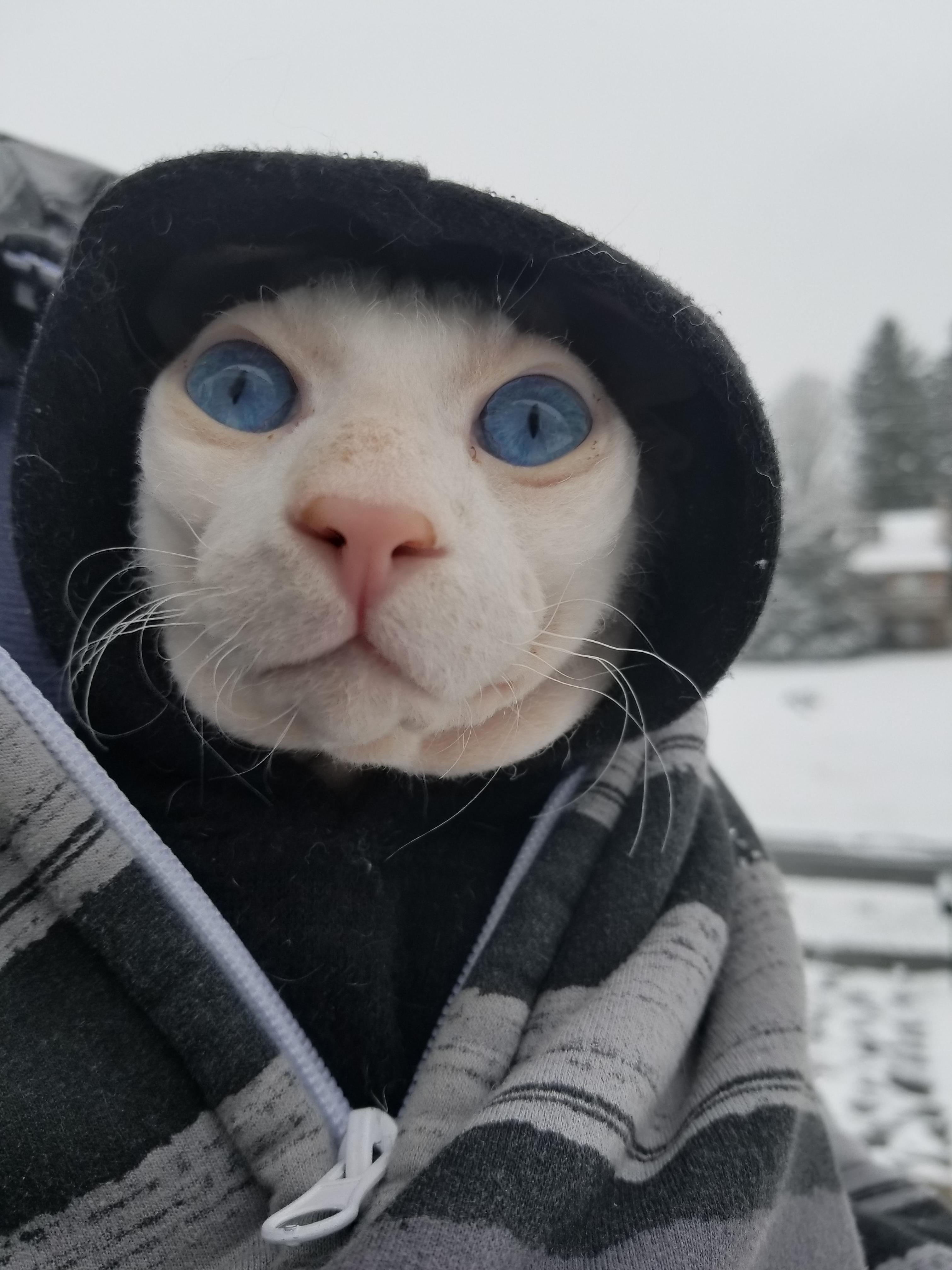 We took kato out for his first snow in his little hoodie. he was mesmerized!