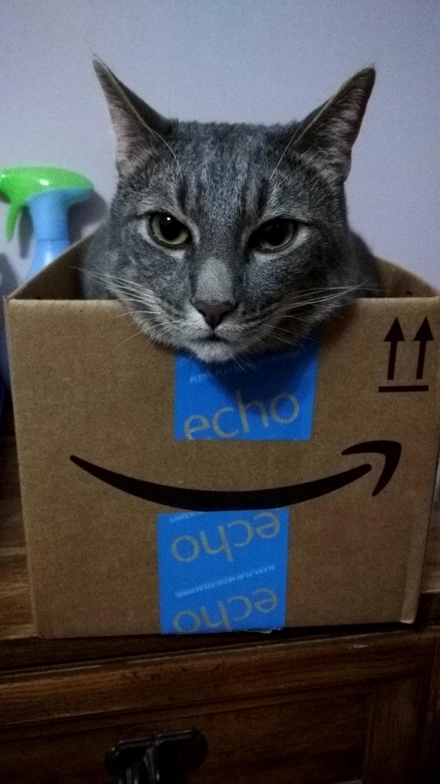 Glaring cat, smiling box.