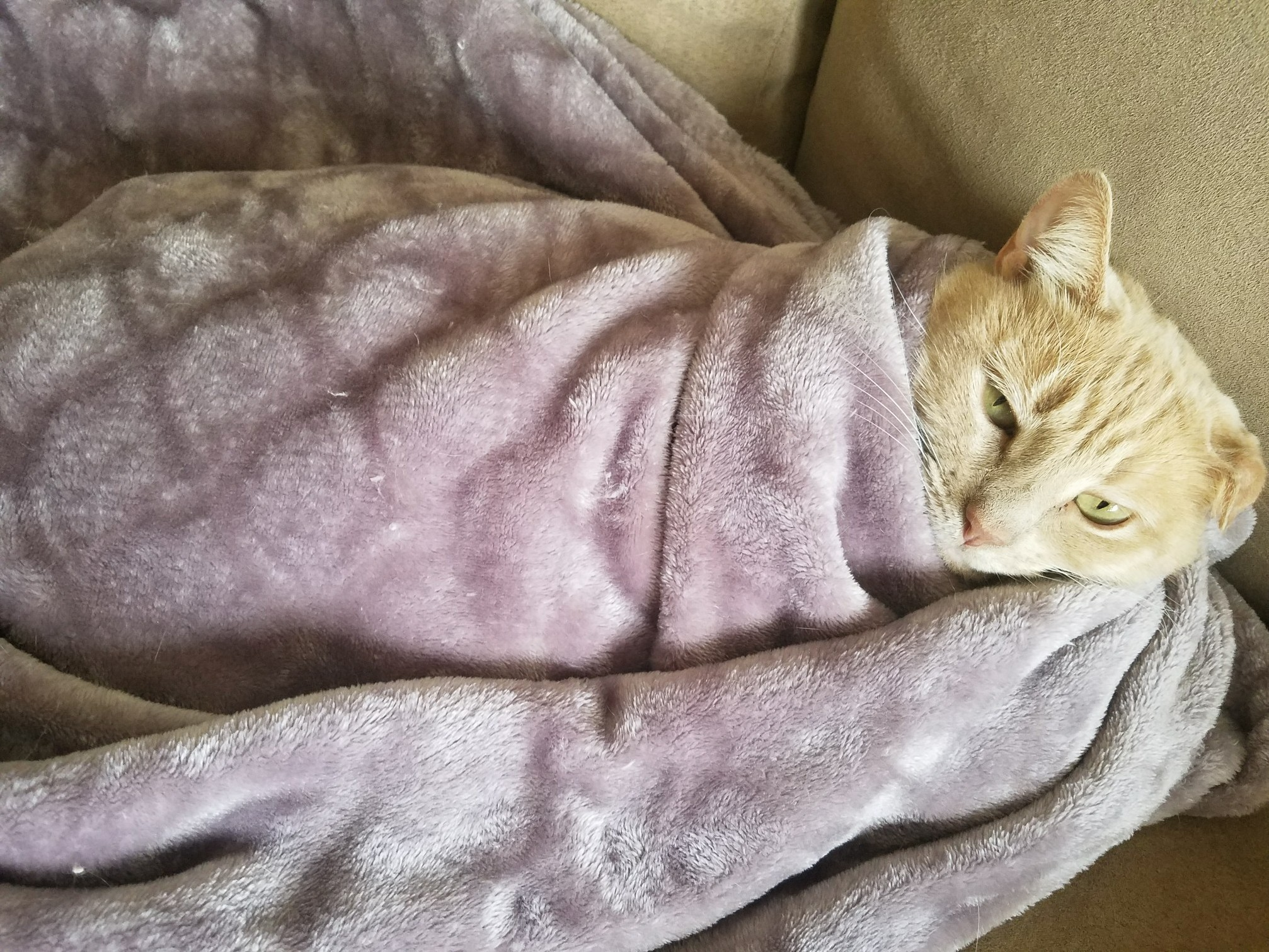 My little burrito